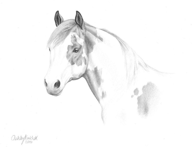 How to Draw Animals How to Draw Realistic Animals with
