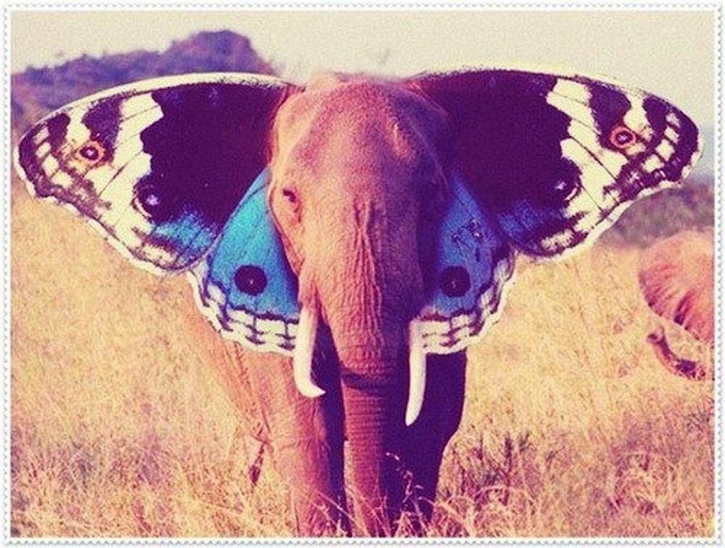 Baby Animal Names   Animal shelter, Elephant ears and An elephant
