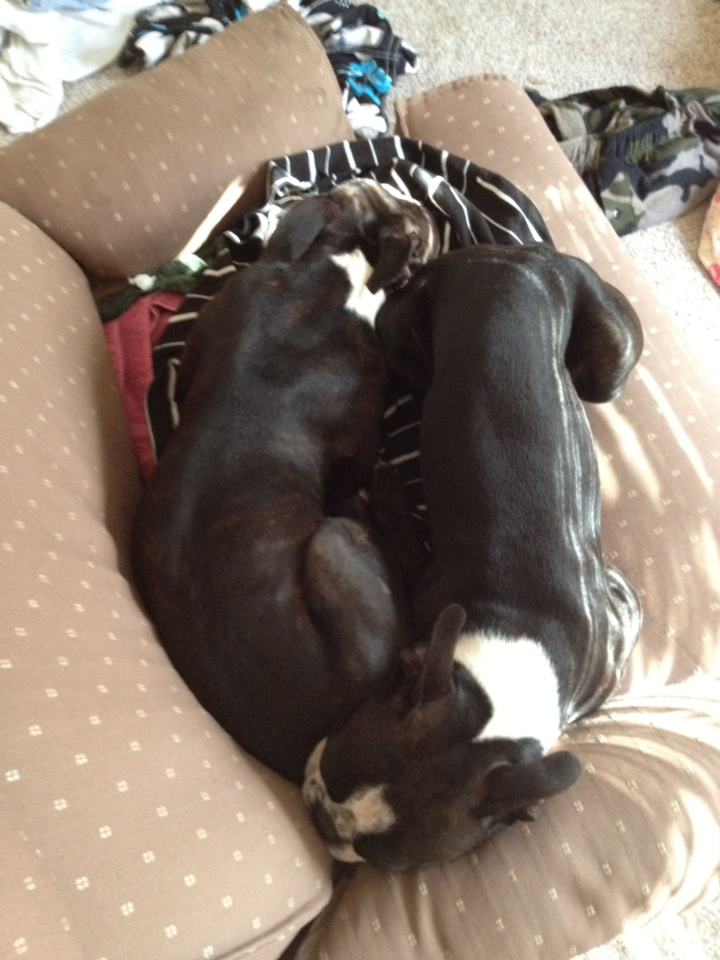 sexy office sluts vieo
