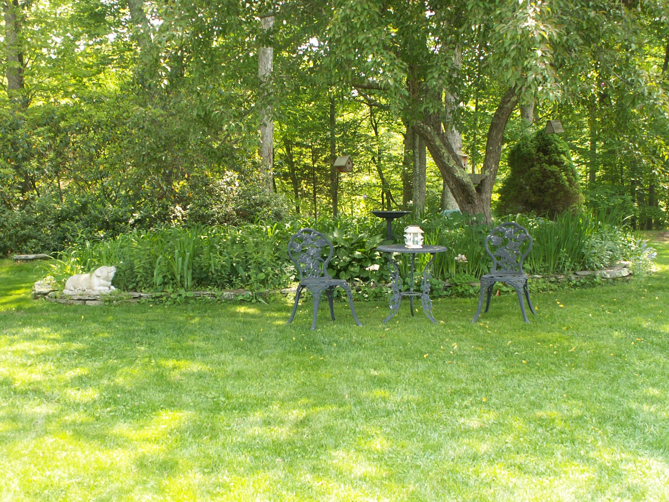 Landscaping Under Elm Trees : Step by landscaping under trees pictures