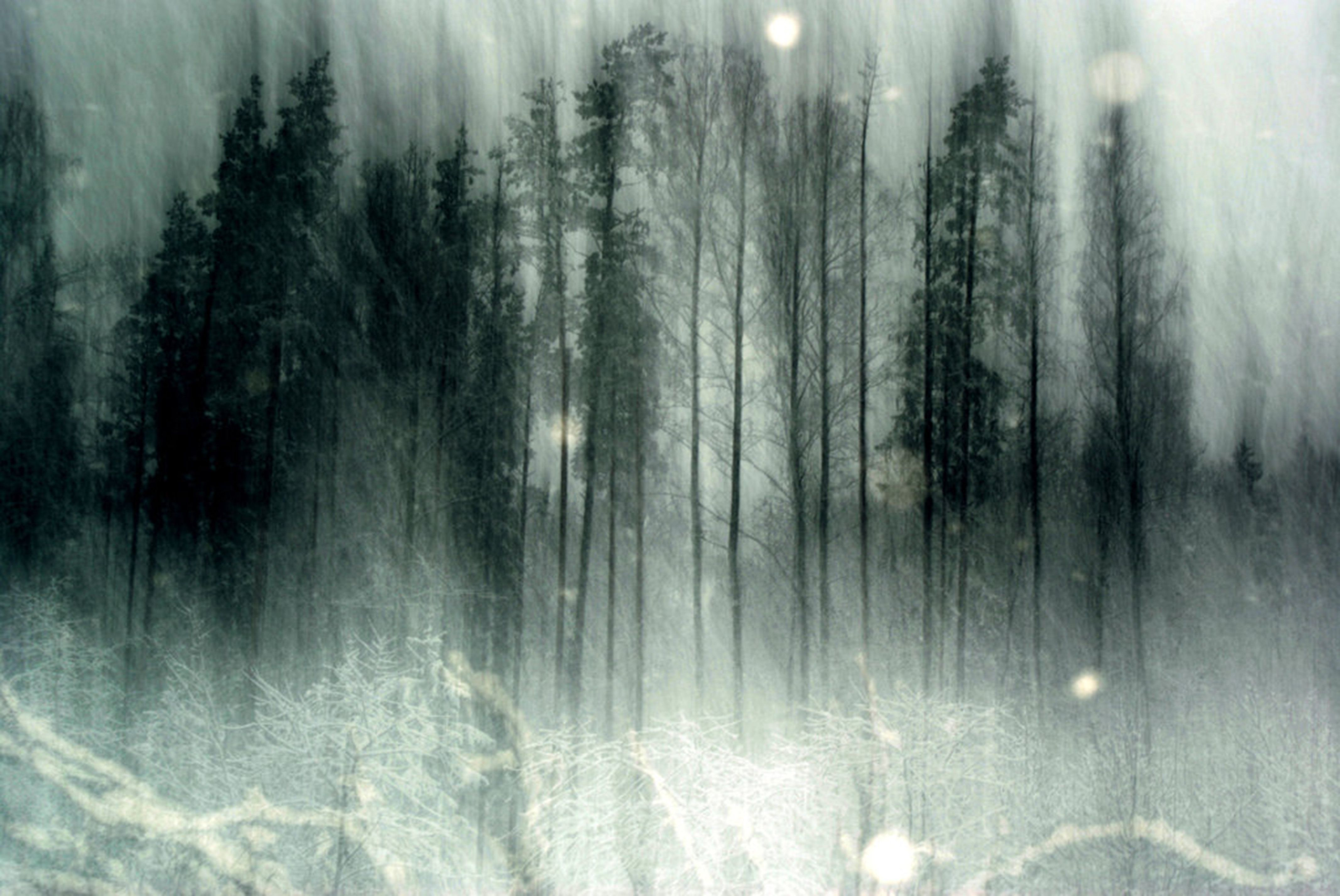 spooky forest wallpaper - photo #5