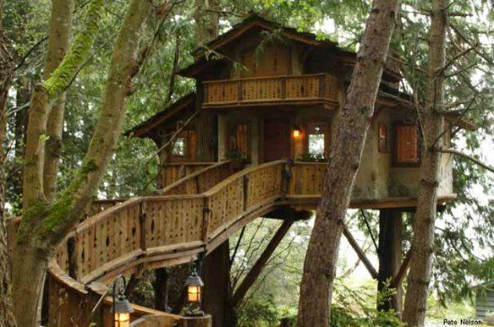 Tree House Masters Tree House Living Pinterest