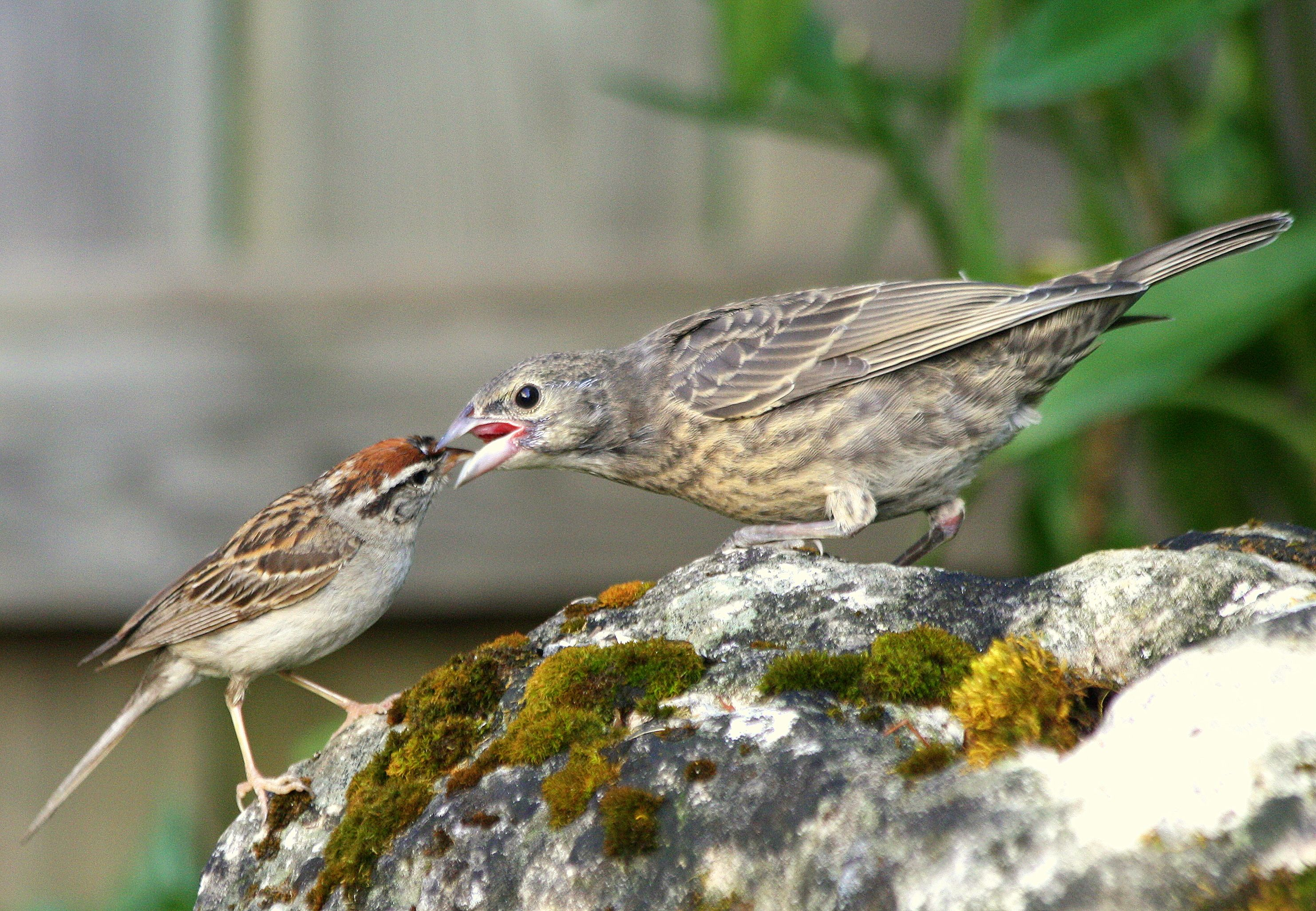 Raising Of Sparrow Pictures : Pin by MiniMade on My Photos  Pinterest