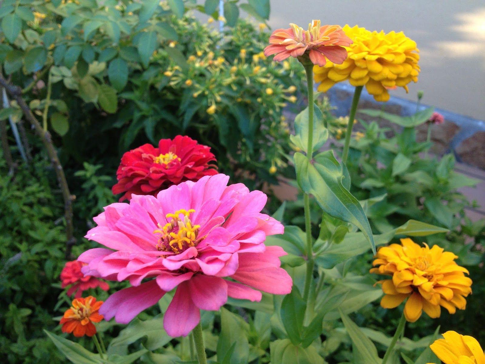 Flores jard n 003 paisajismo y jardineria pinterest for Plantas paisajismo