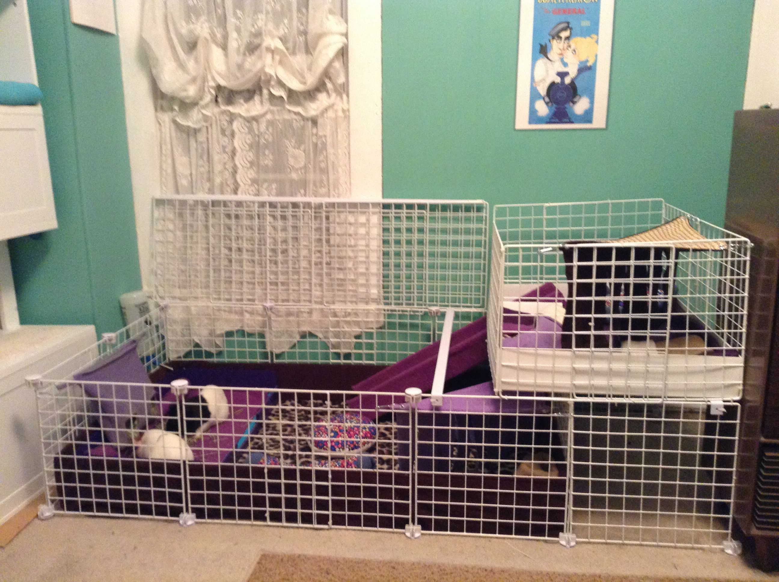 Guinea pig cage idea 2 story rabbit and guinea pig for Guinea pig cages for two