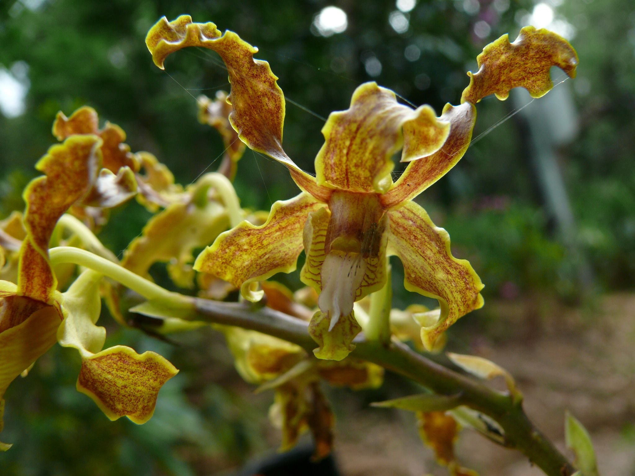 botanical gardens atlanta cocktails