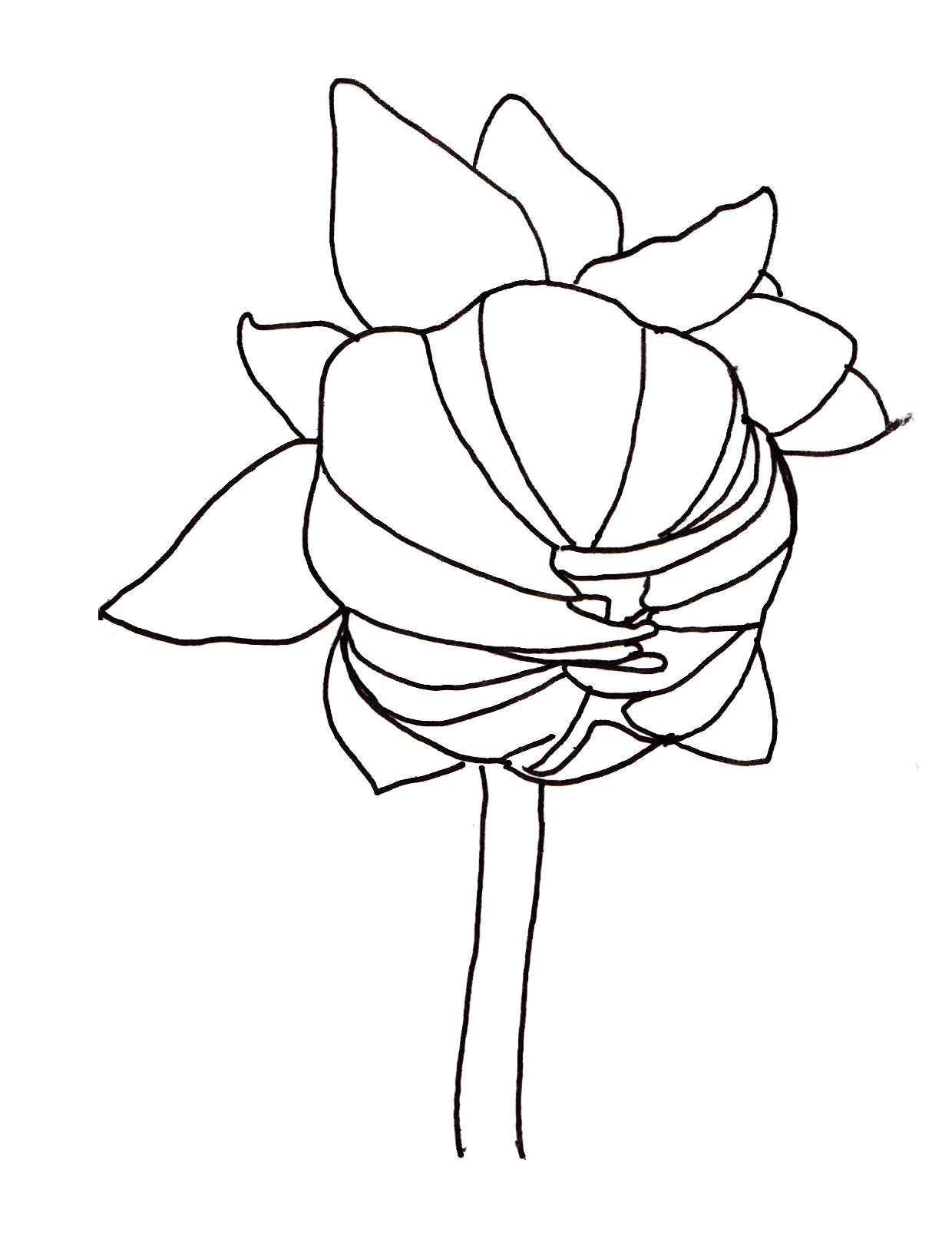 Dahlia Flower Line Drawing : Line drawing closed dahlia drawings pinterest