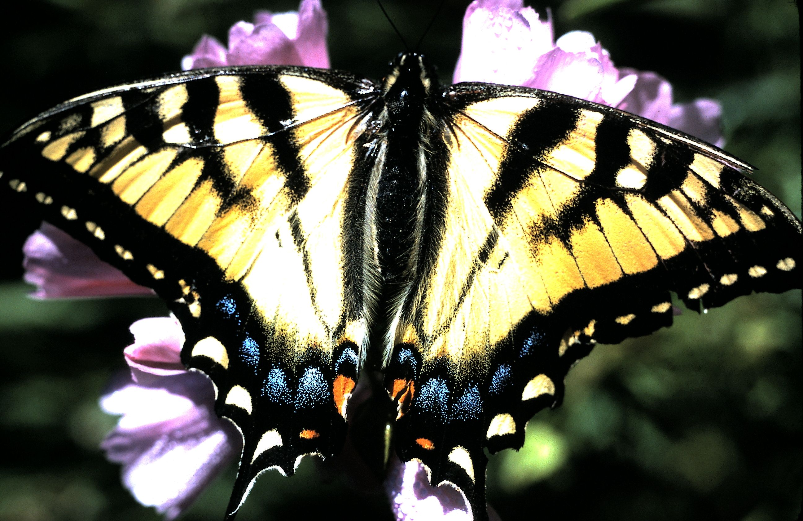 Butterfly Colorful Things Beautiful Scenes Pinterest