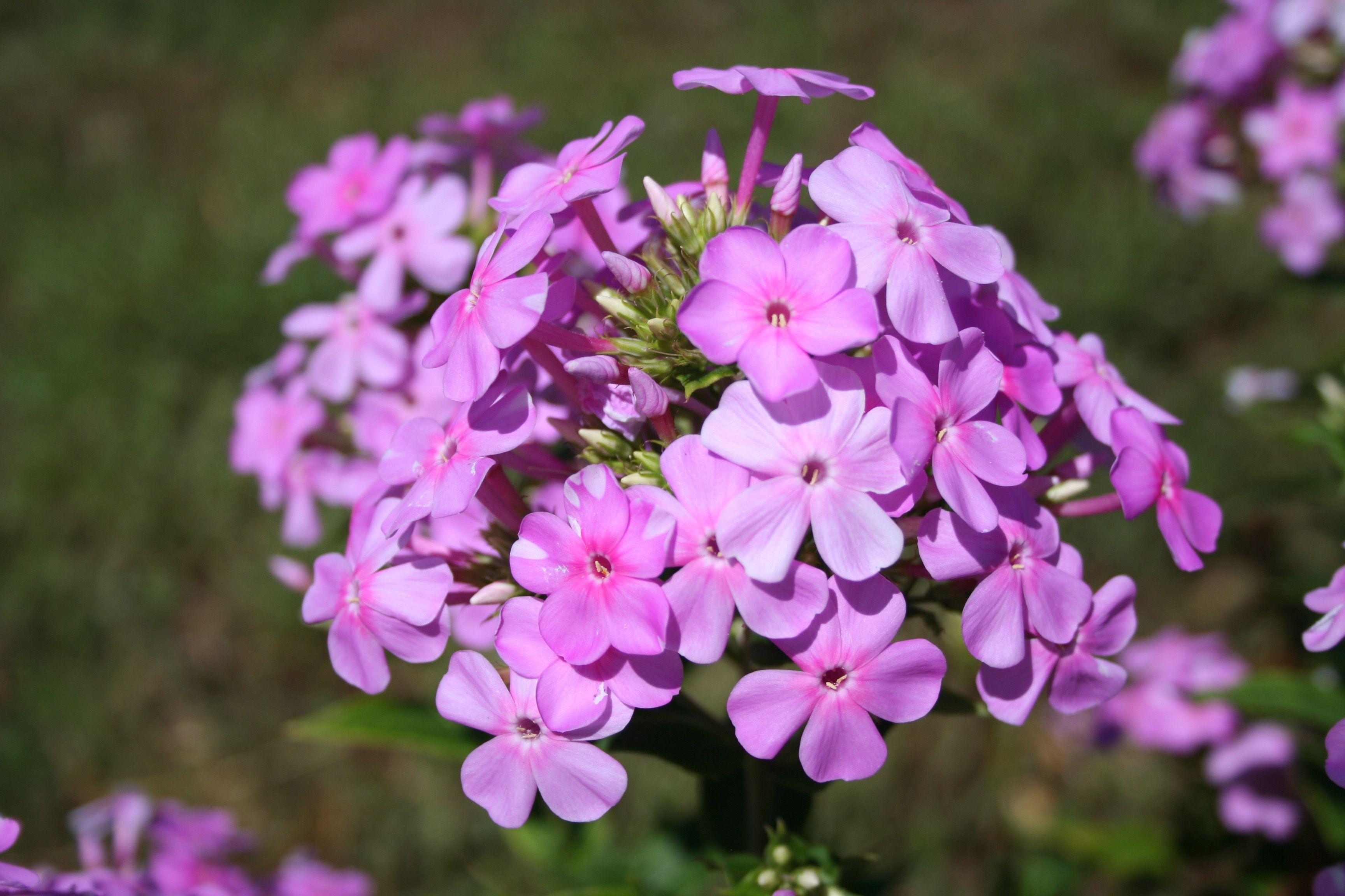 flowers okc