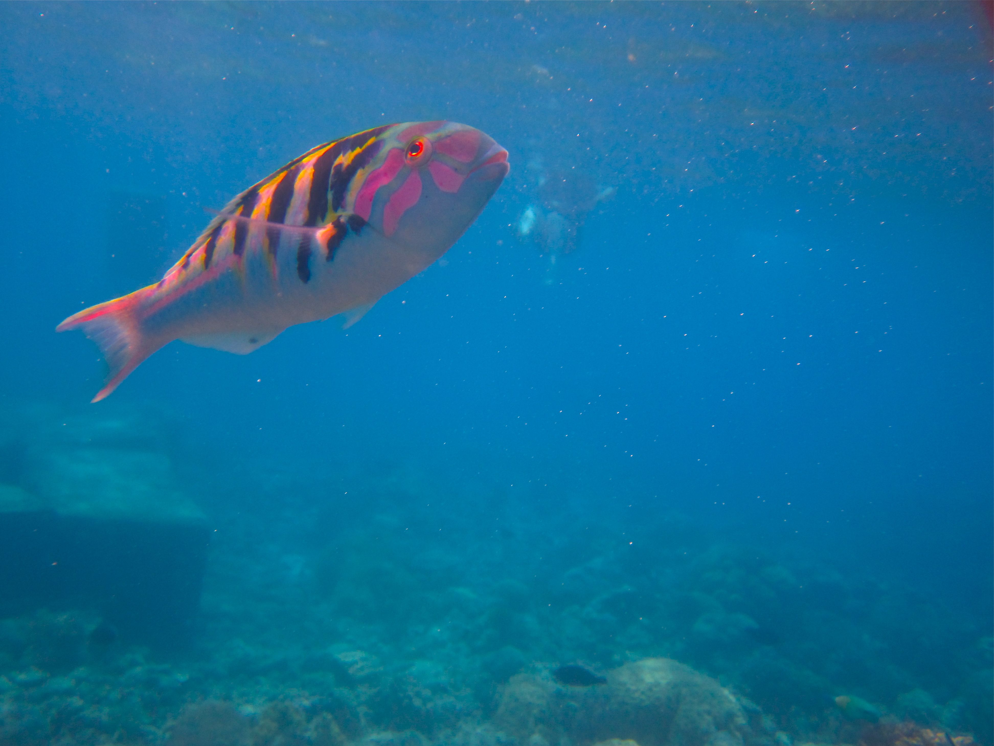 Great barrier reef fish fish pinterest for Great barrier reef fish