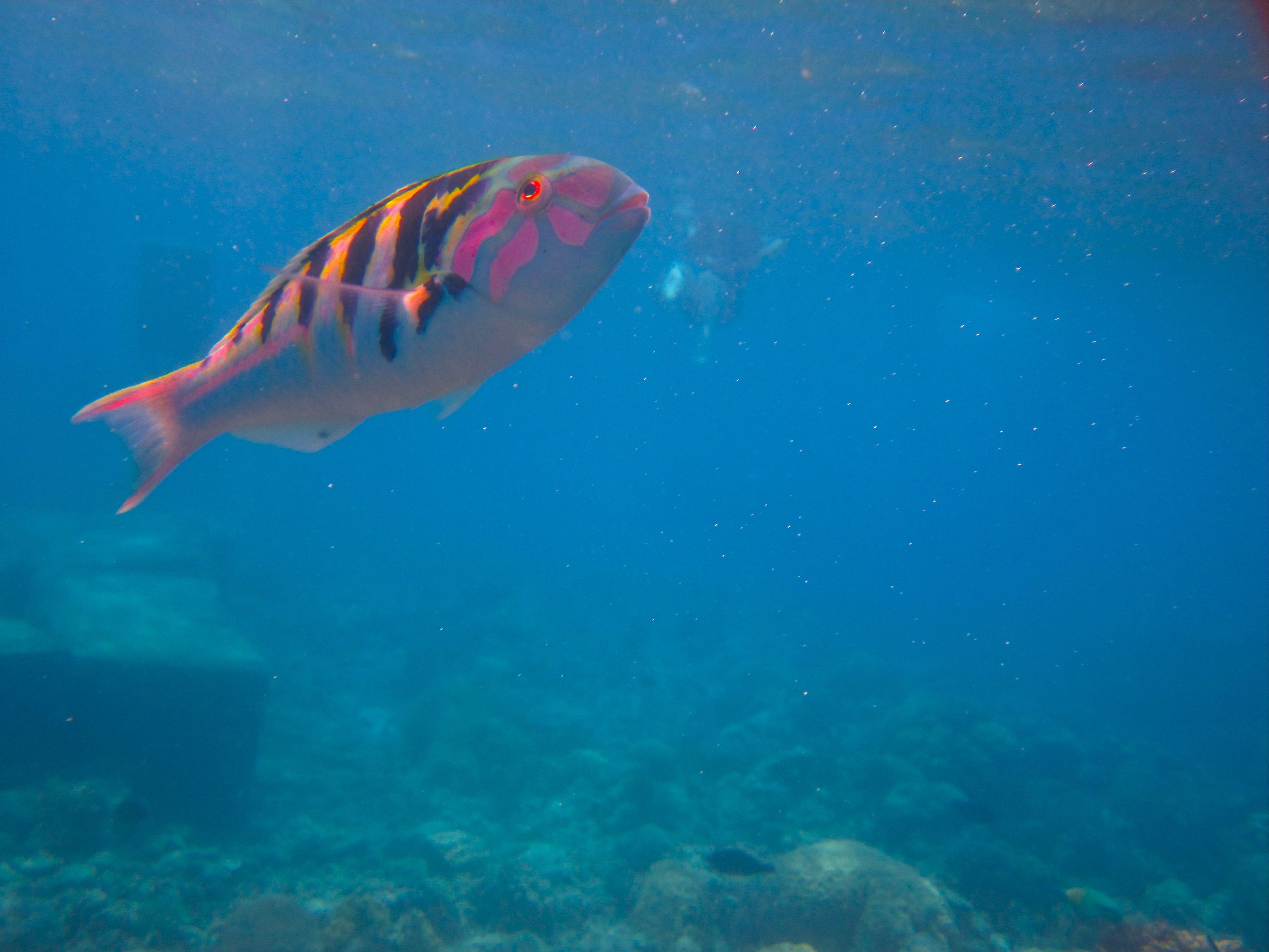 Great Barrier Reef Fish Fish Pinterest