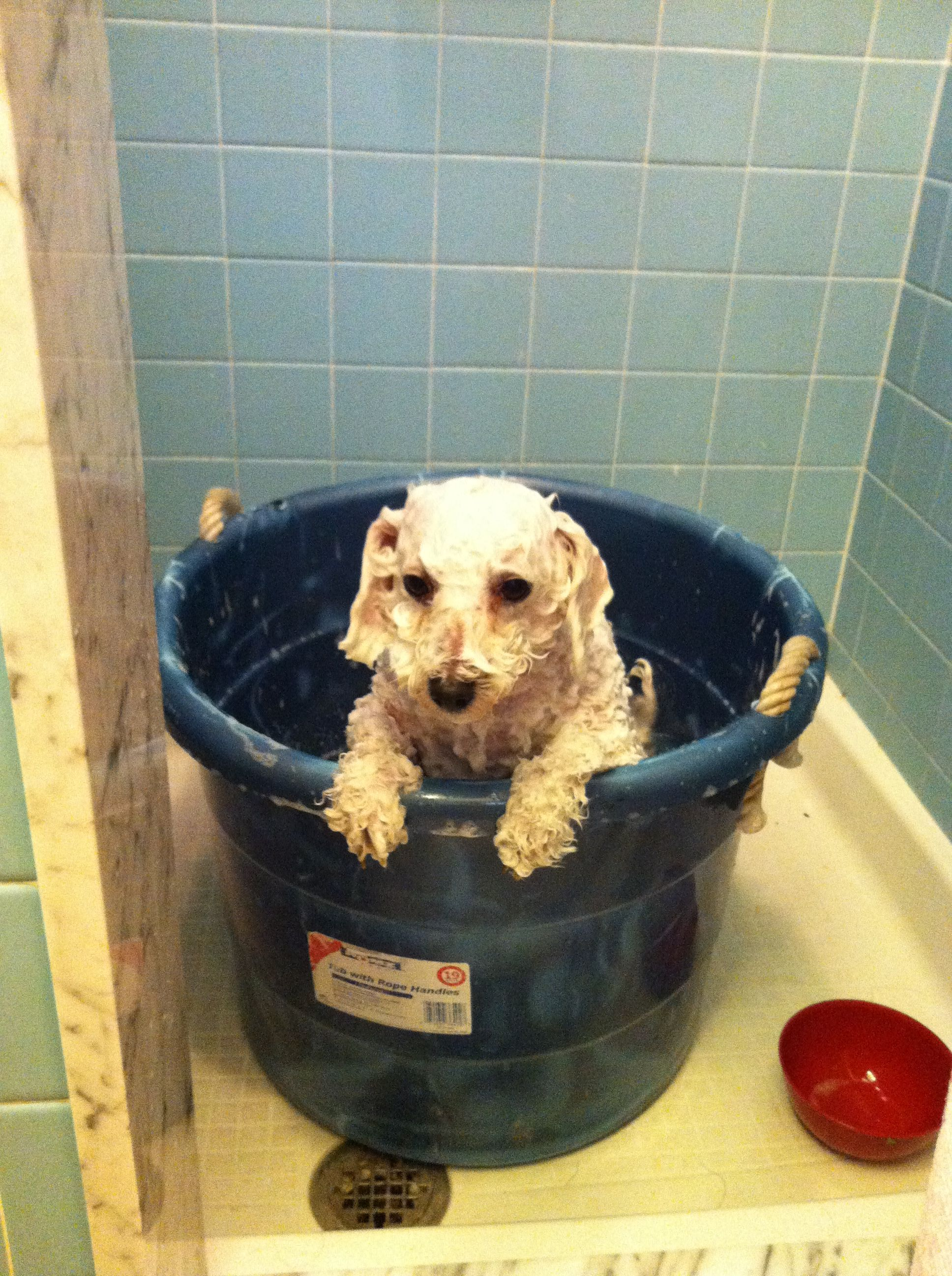 Wet dog Children's book images Pinterest #752C1A