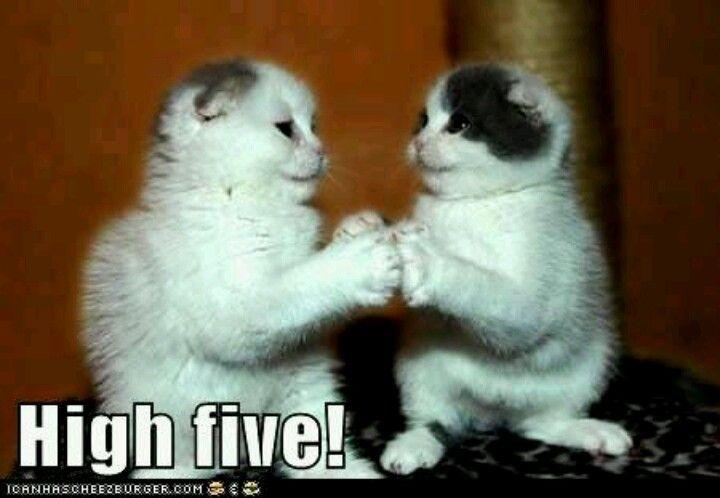 topcat scratching post