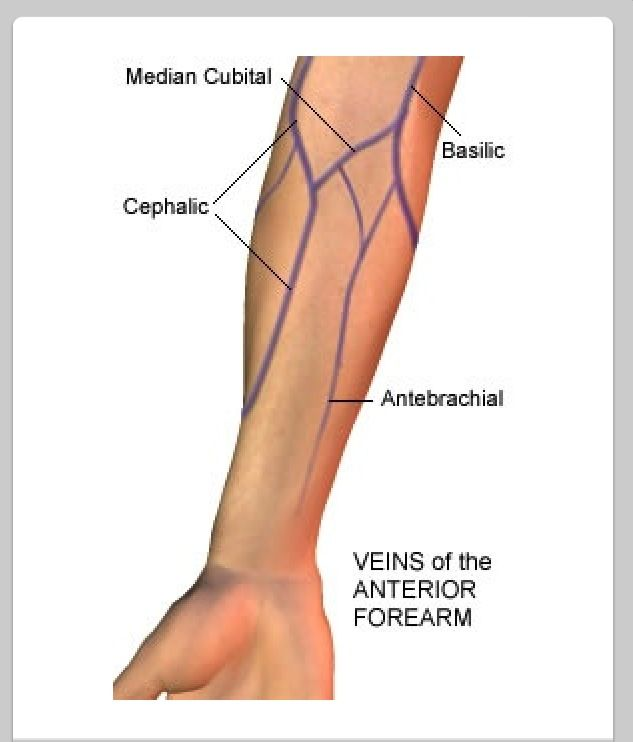 Similiar Vein Sites For Phlebotomy Keywords
