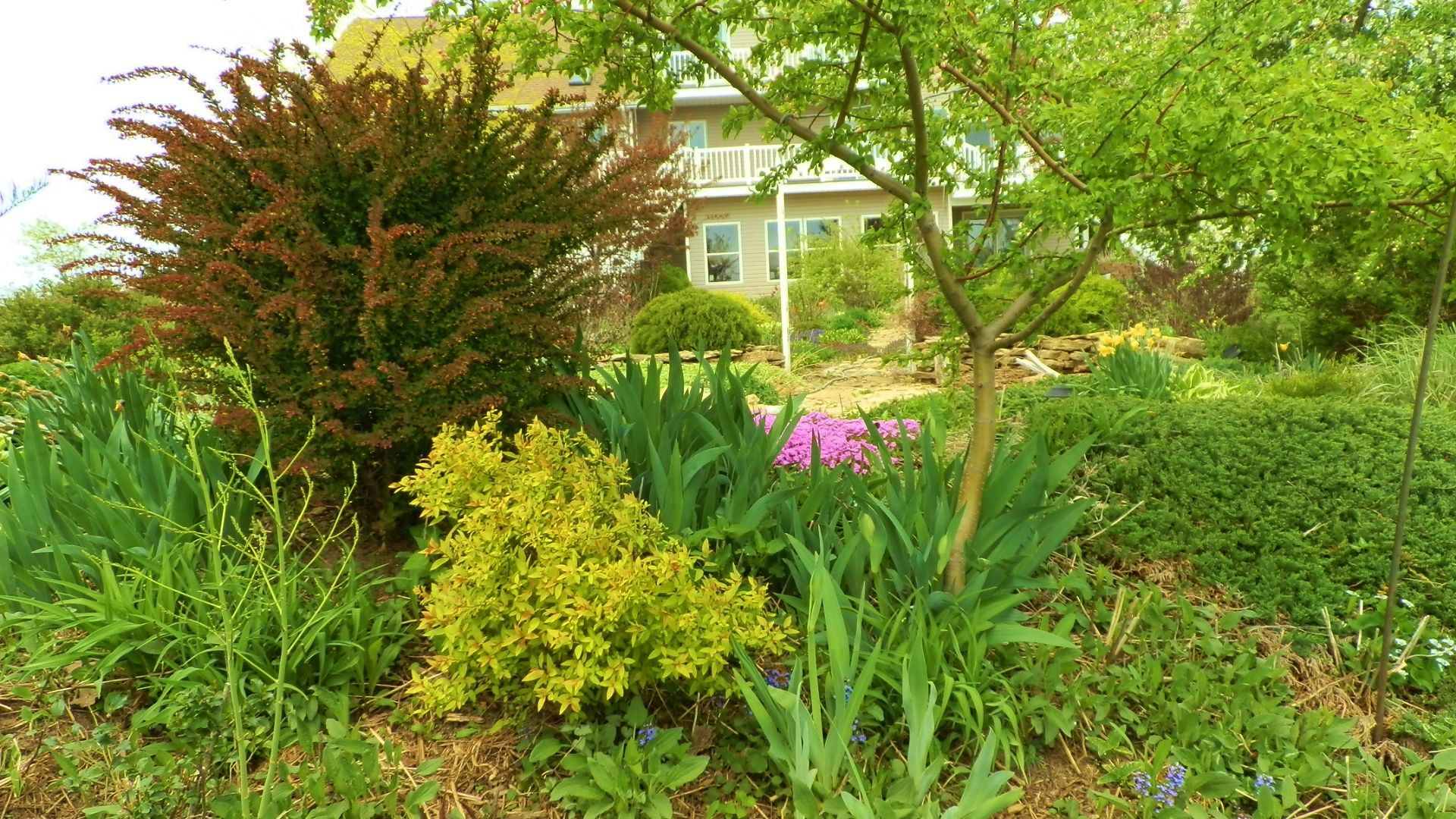 Shrubs add to the flower bed back yard ideas pinterest for Best bushes for flower beds