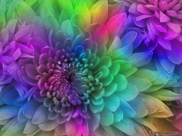 very pretty flowers pinterest