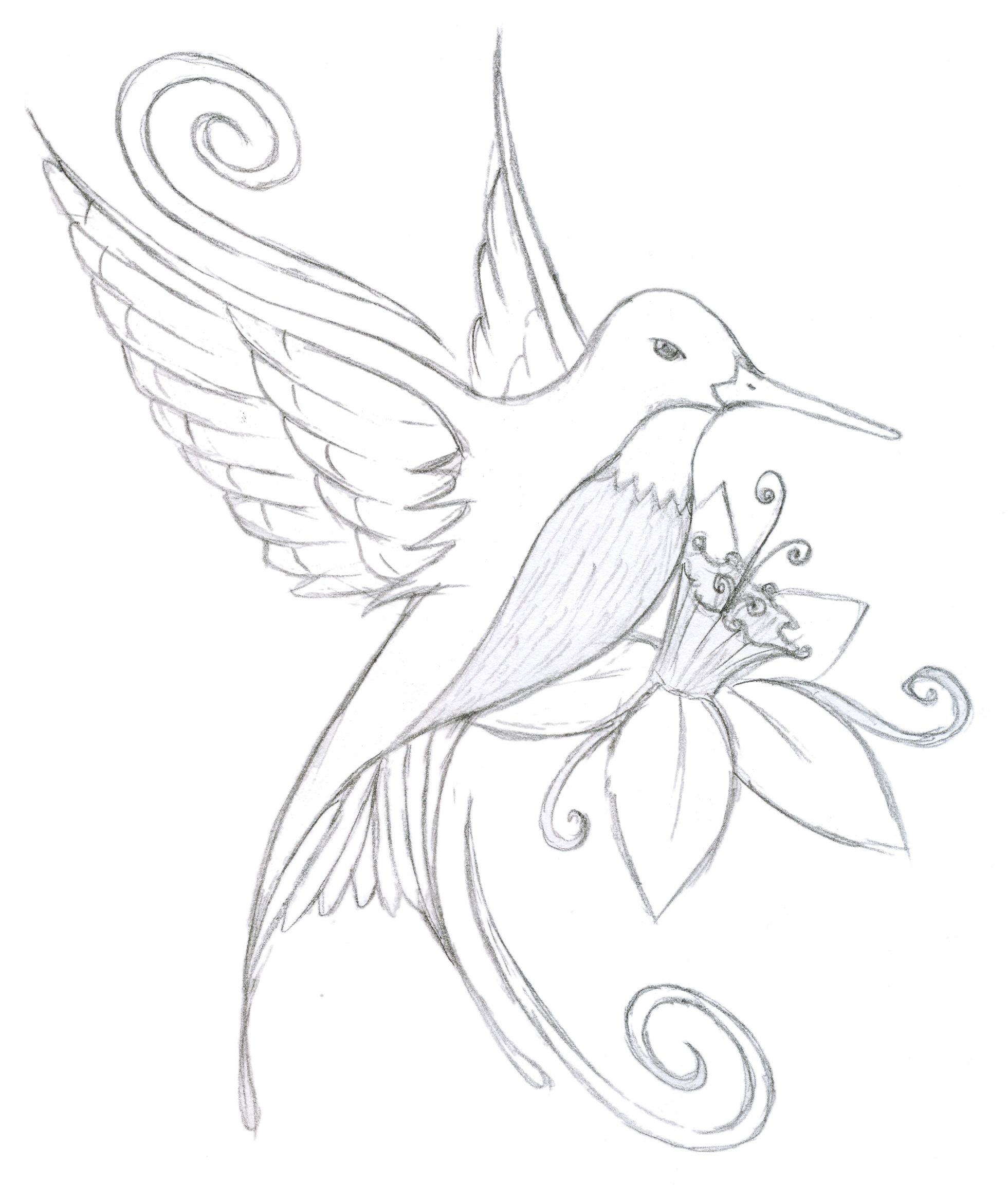 Hummingbird Printable Coloring Pages Coloring Pages