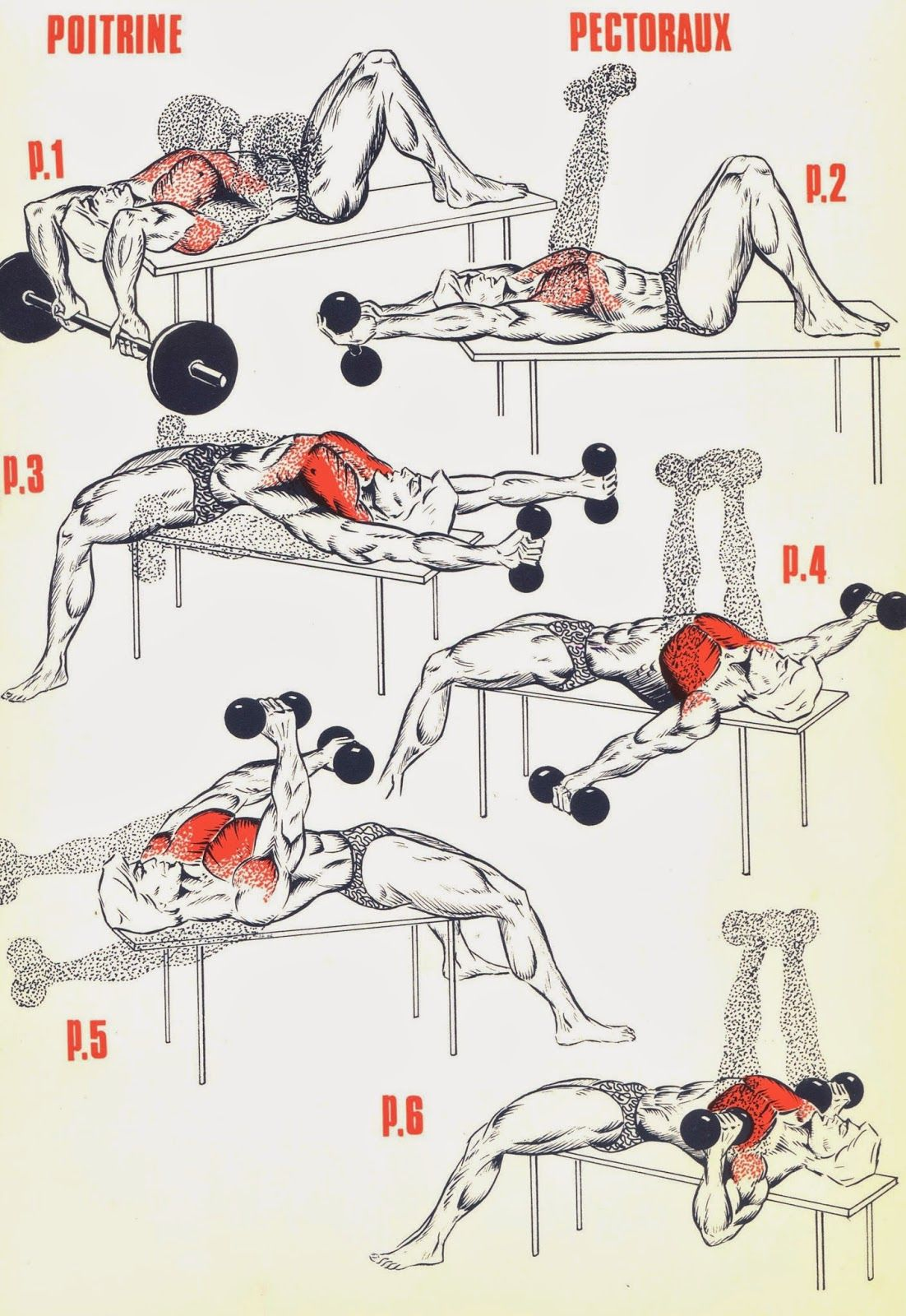 Накачать мышцы в домашних условиях фото пошагово