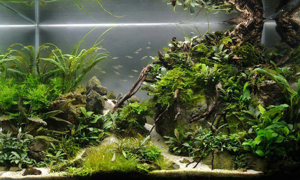 Aquascape... Aquarium: Freshwater Pinterest
