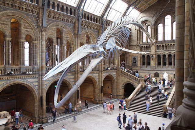 シロナガスクジラの画像 p1_3