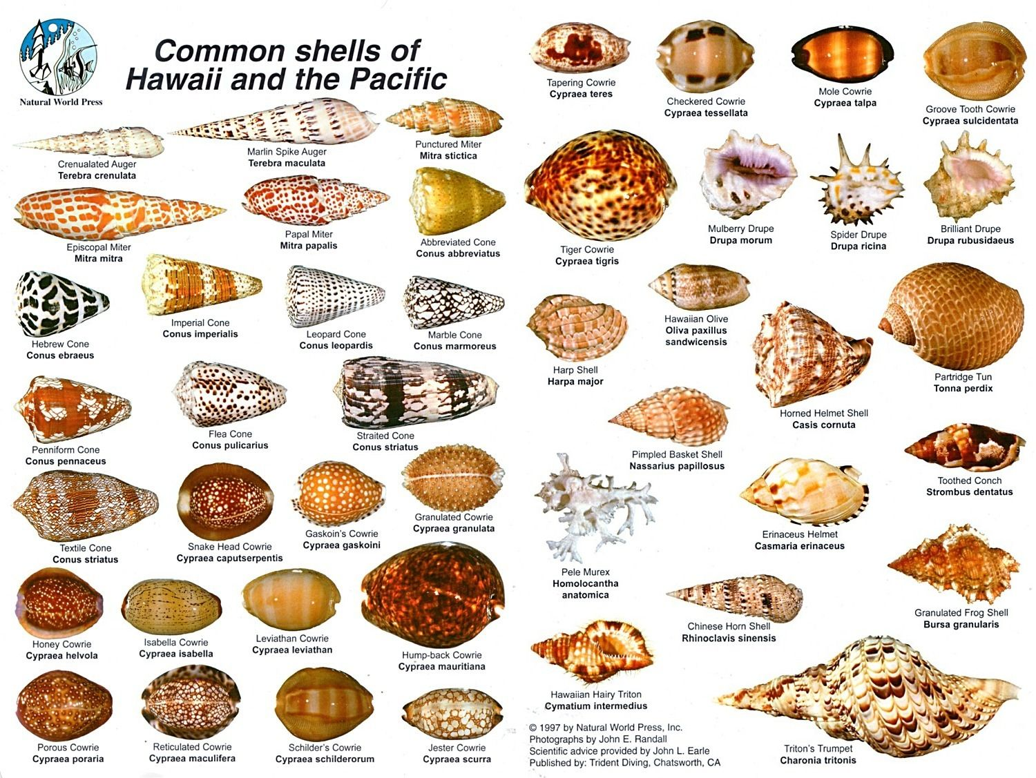 Common names of shells with pictures What is Caliber? Bullet sizes explained - The Firearms Guide