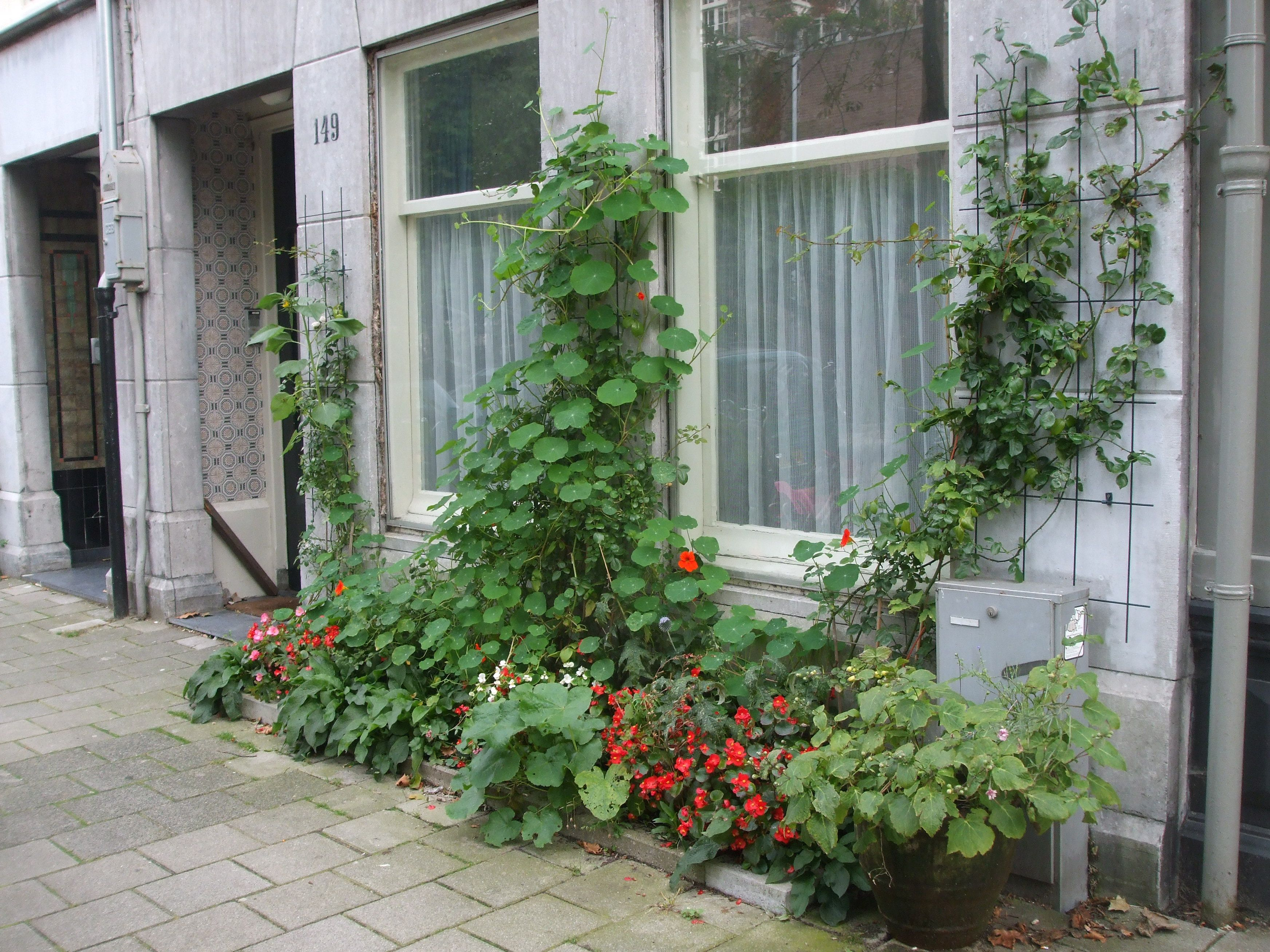 Plants In Front Of A House Plants And Flowers In Pots In