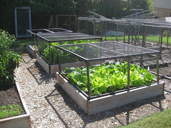Raised beds with pest covers gardening pinterest Raised garden bed covers