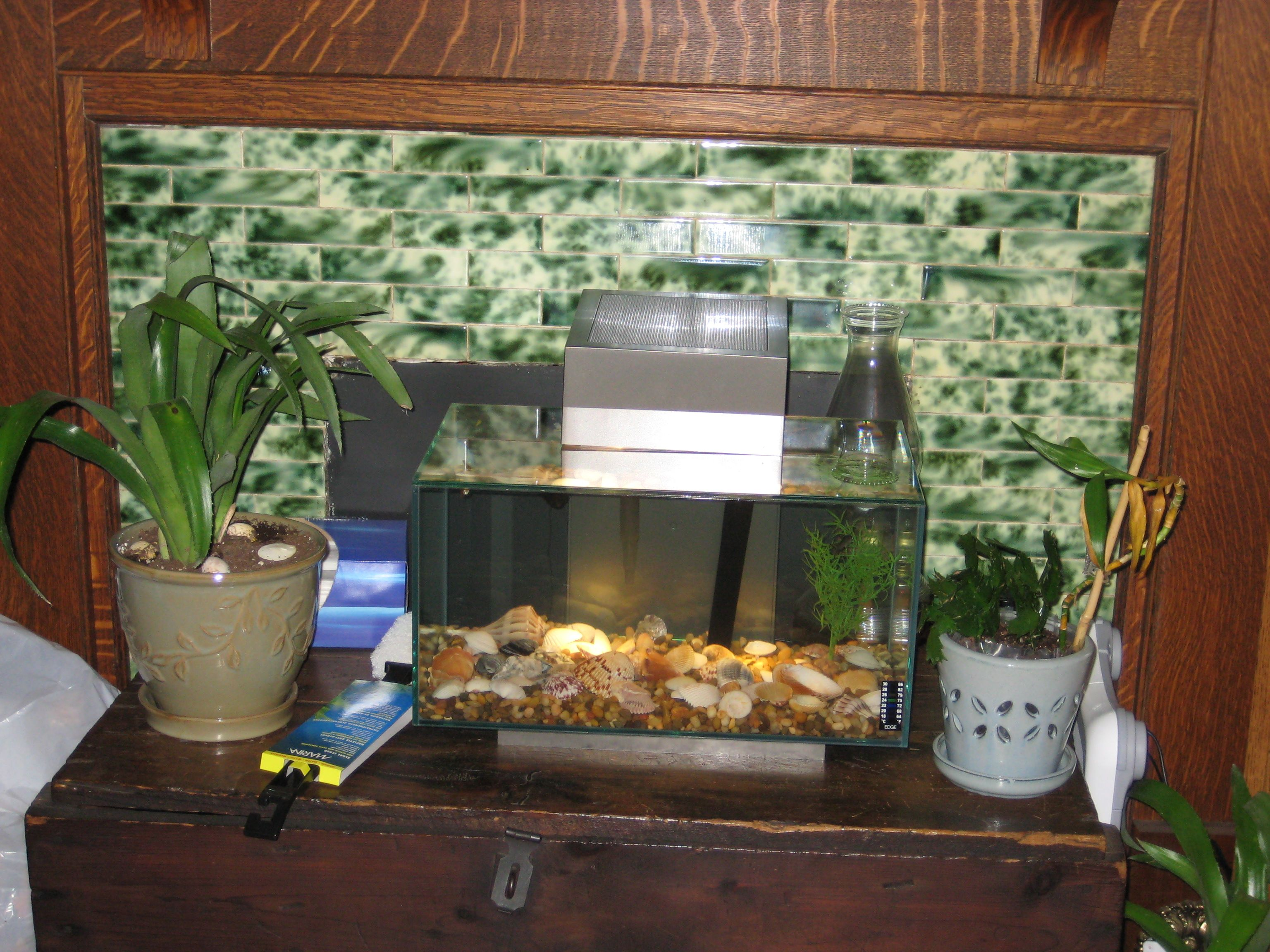 Very cool little fish tank For the Home Pinterest