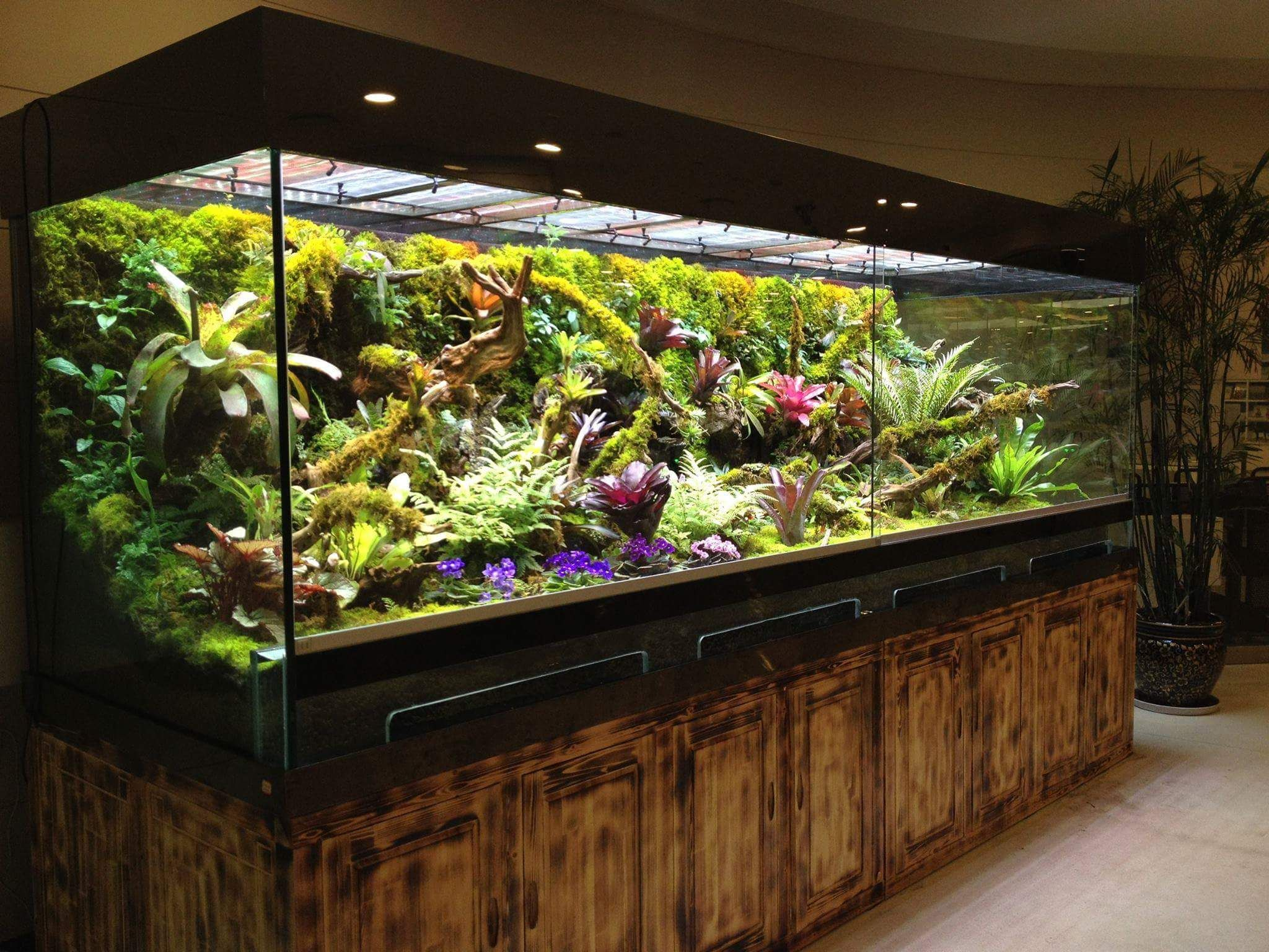 Террариум для наземных лягушек и жаб, размеры террариума 15