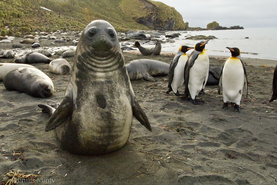 Baby penguins and seals