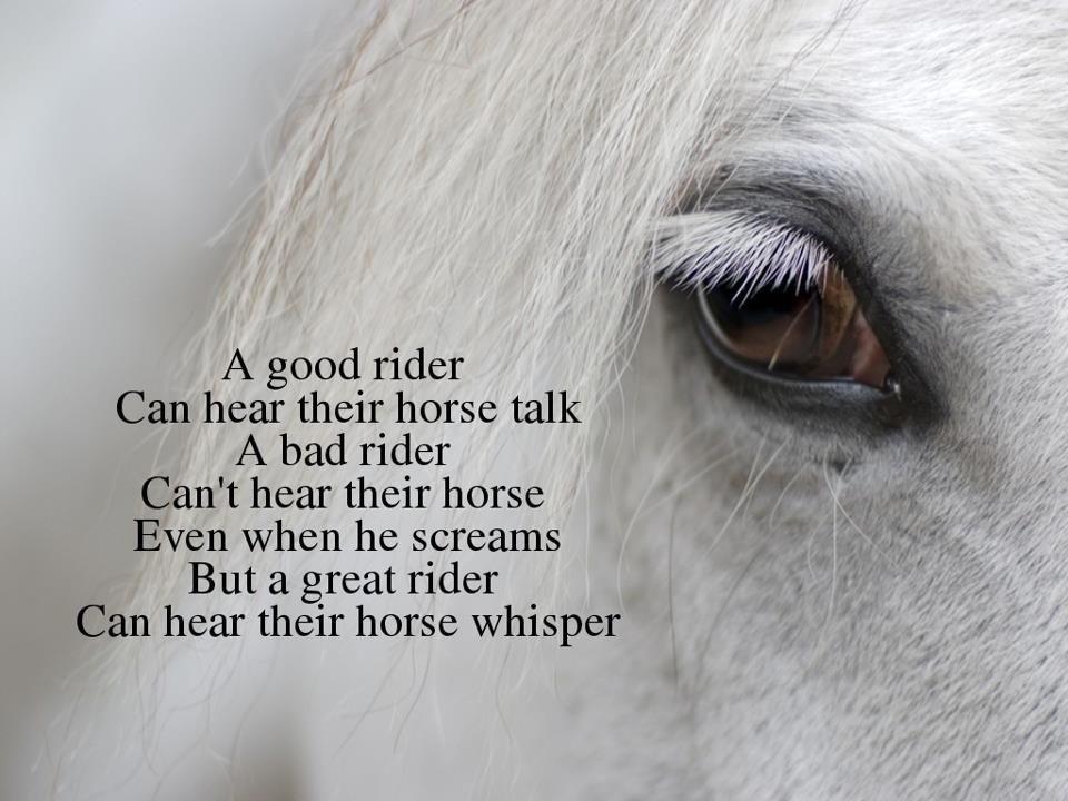 White Horse Quotes Quotesgram