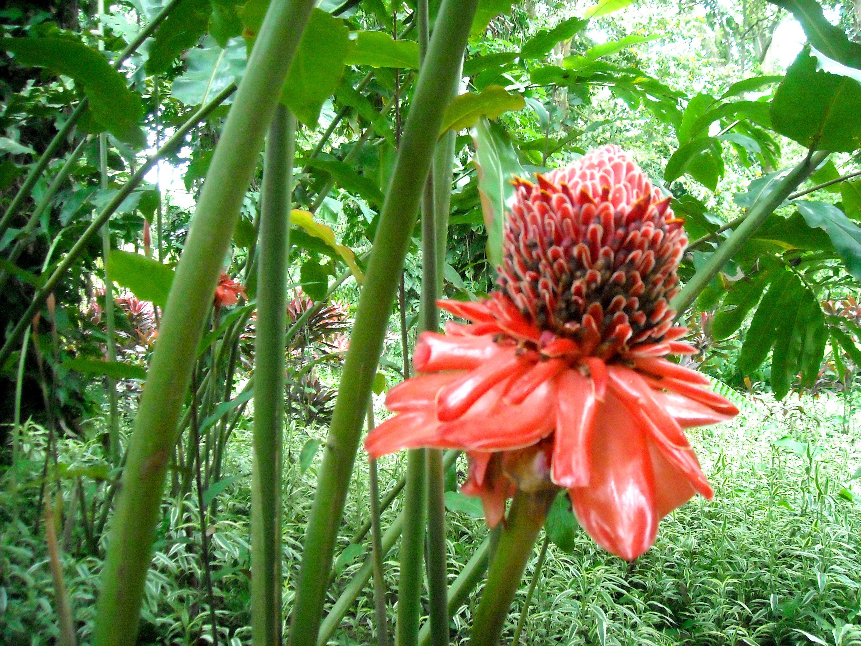 Flores exoticas on pinterest 21 pins for Plantas exoticas online