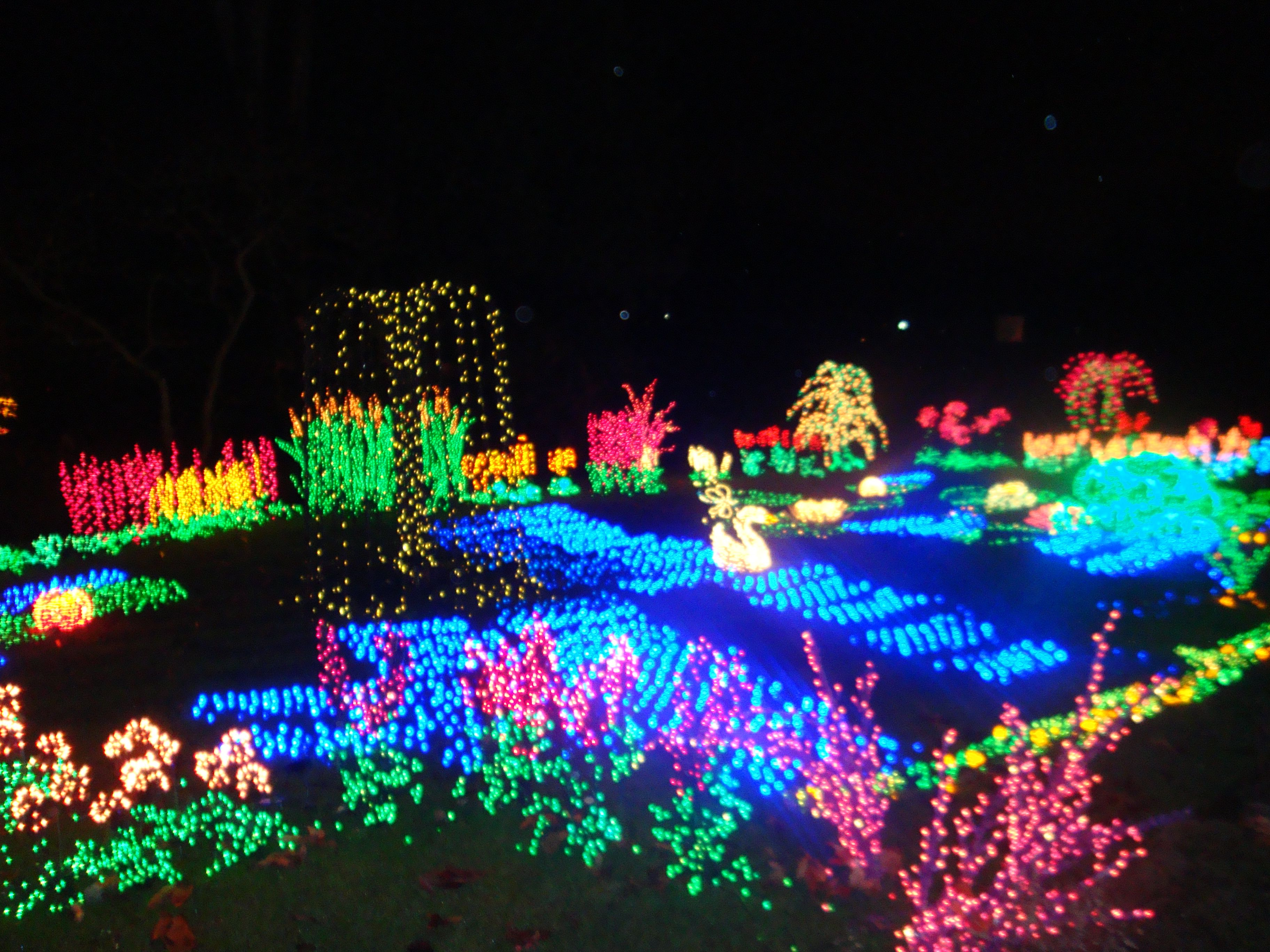 botanical gardens lights decorating ideas for