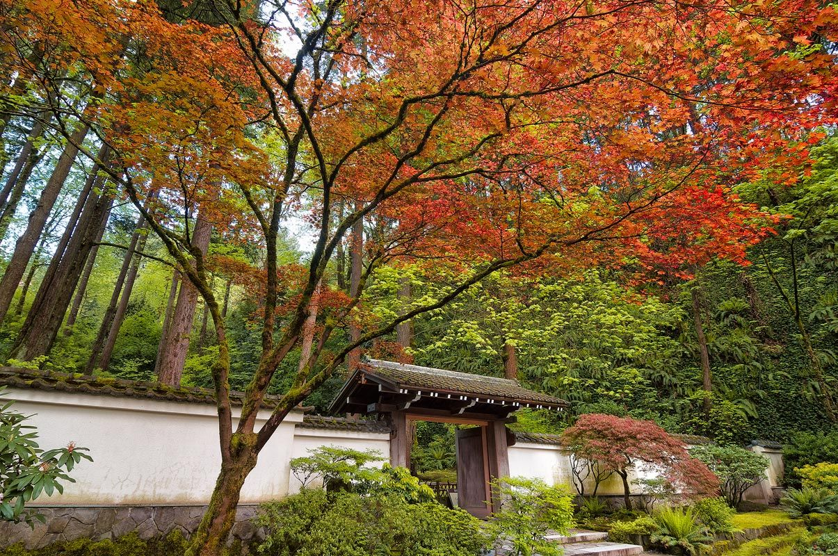 Portland japanese garden japanese and modern japanese for Contemporary japanese garden
