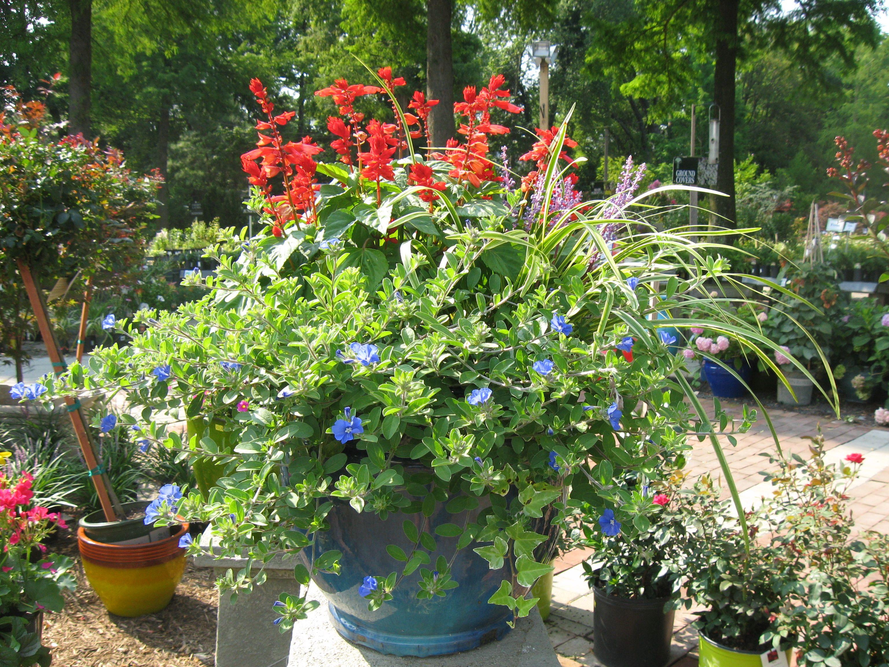 Full sun container garden ideas photograph full sun contai for Garden designs for sun