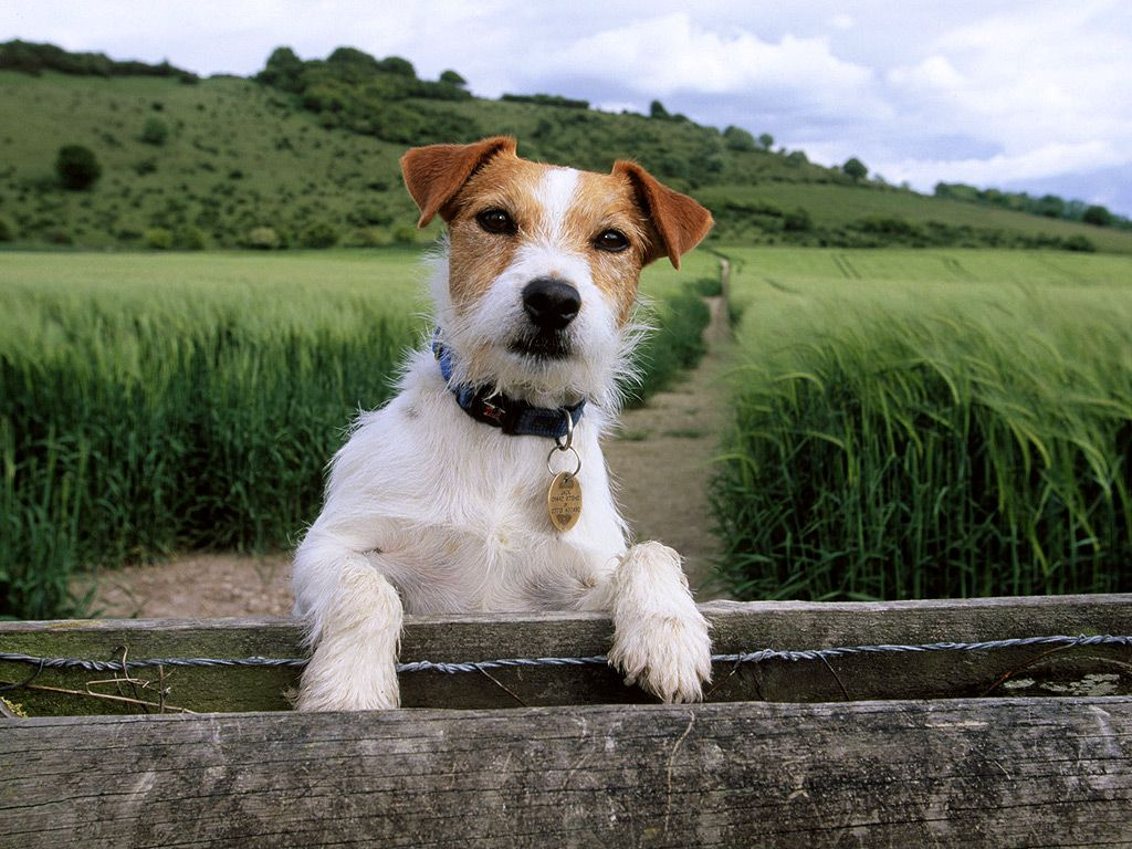 Jack russell love the bunny pinterest