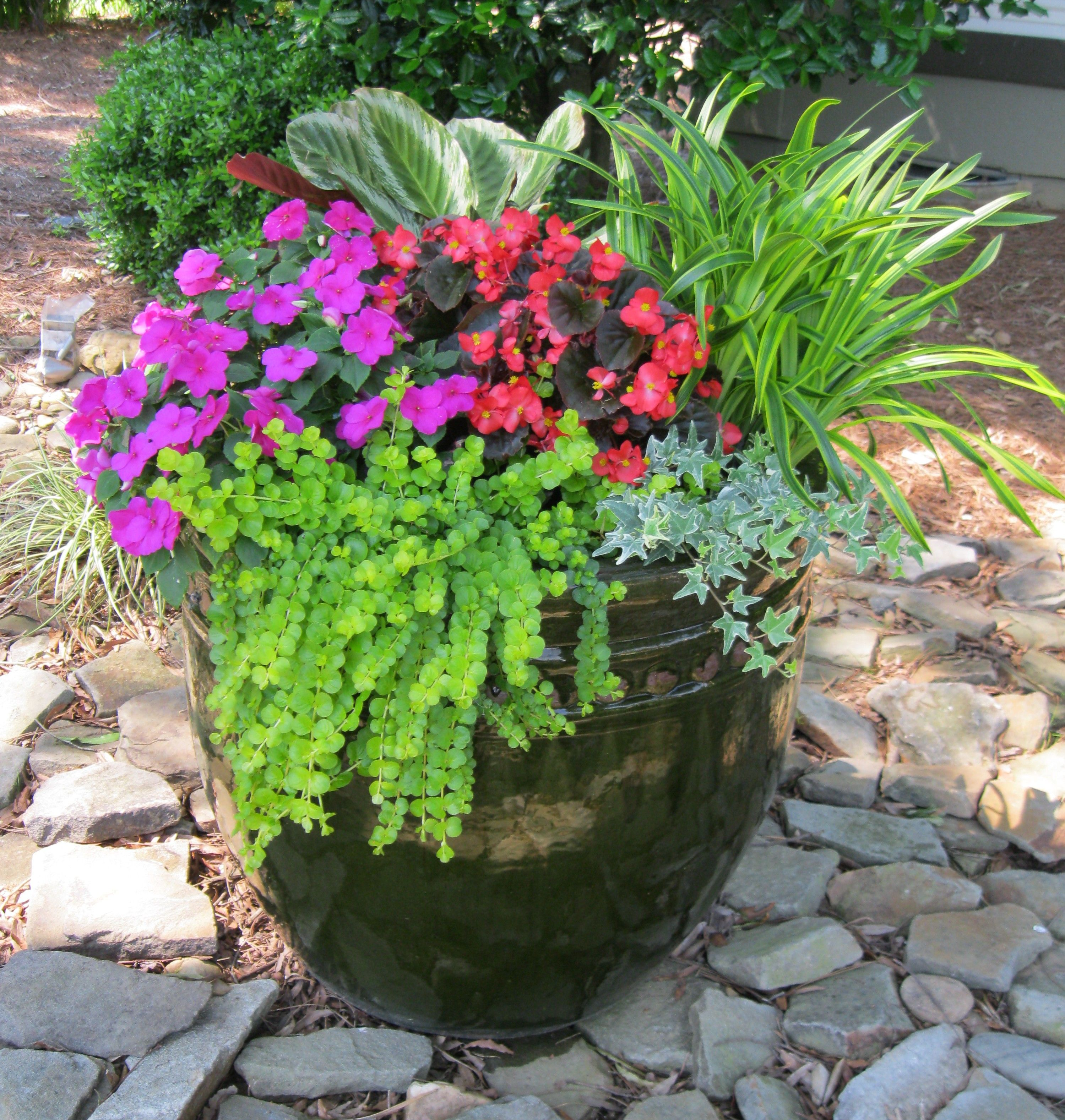 My front yard container garden garden ideas pinterest for Container gardening ideas