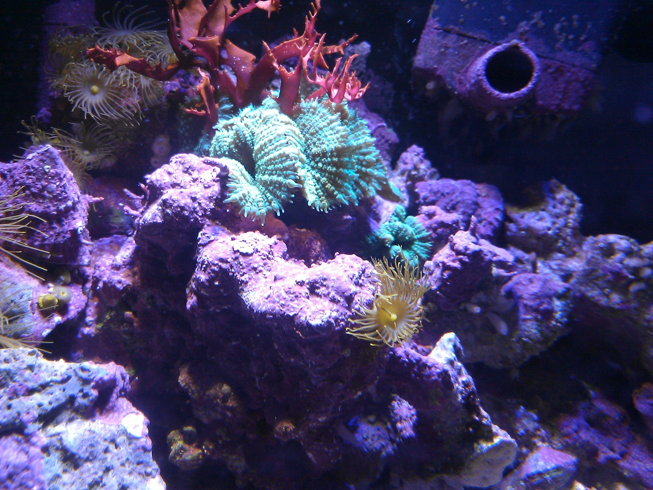 ... gallon. soft coral, red algae Reef tanks & Marine inverts Pinte