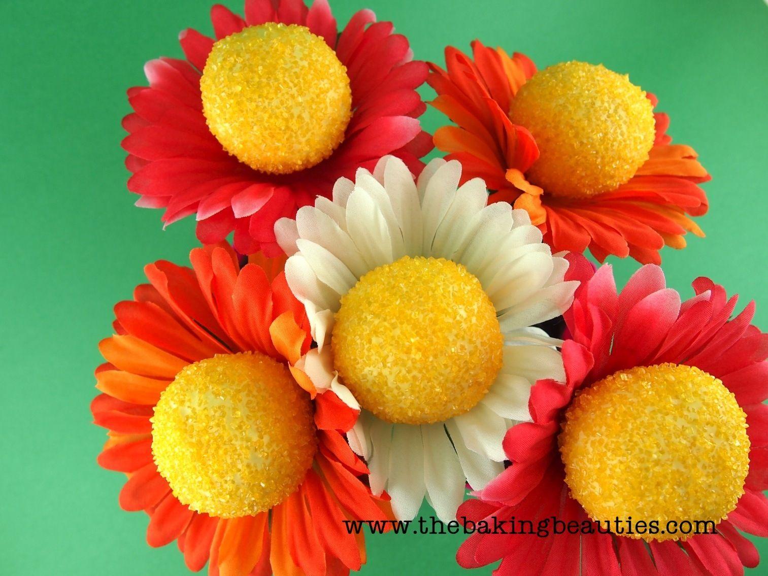 Daisy Cake Pops Cake Pops Ideas Pinterest