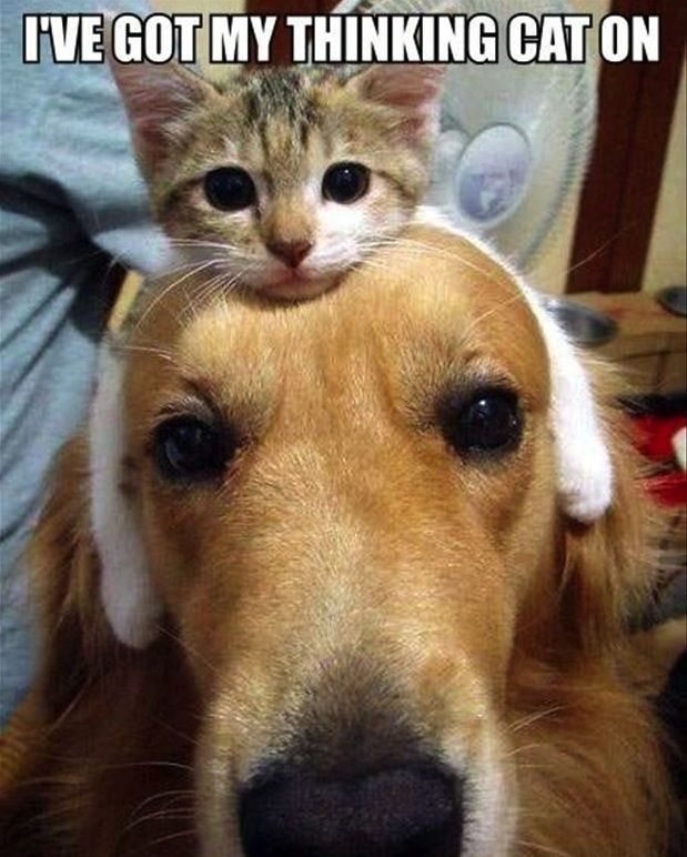 Resultado de imagem para doin' good, cats
