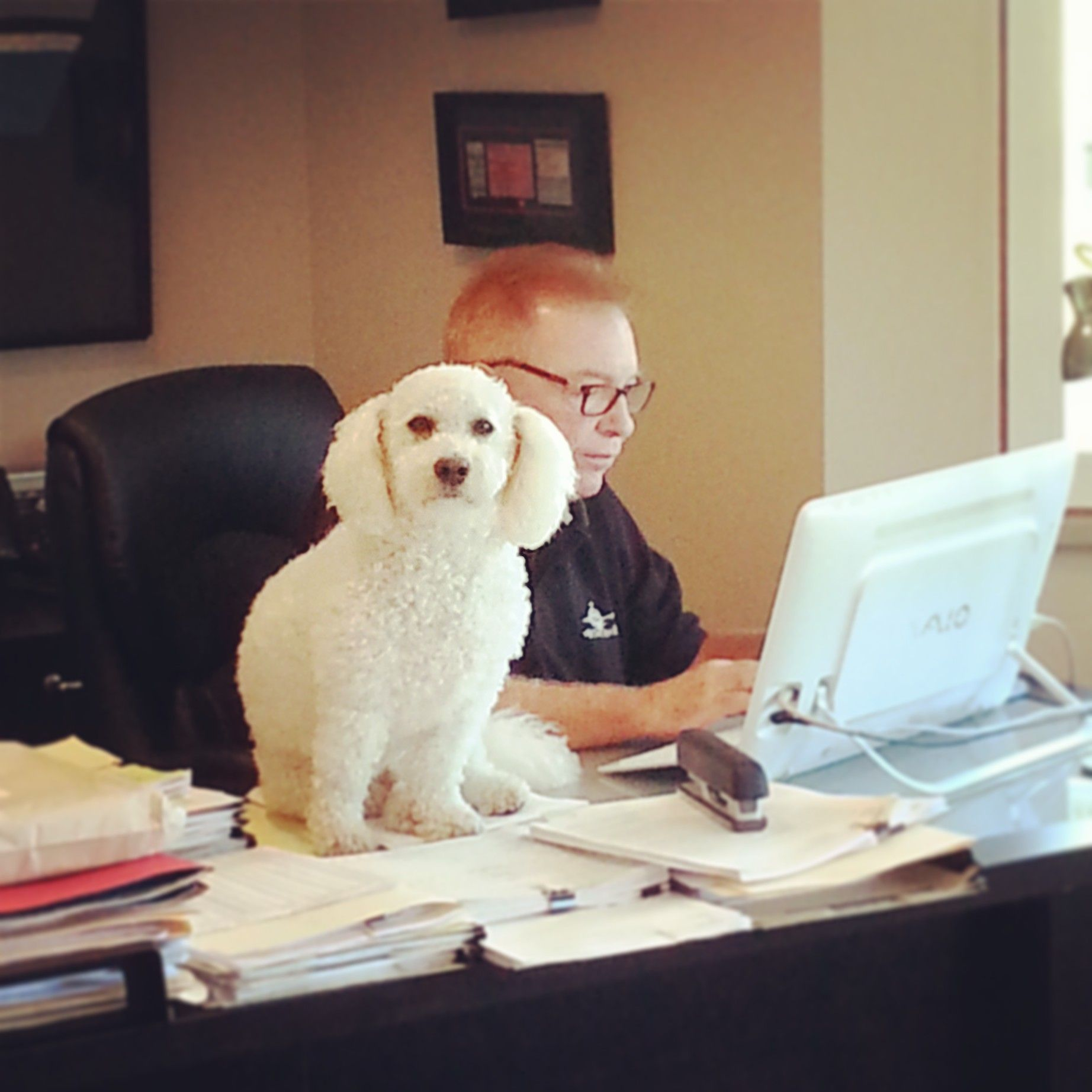 iFund Lending GM, Michael Duffy working hard with one of his dogs Bob