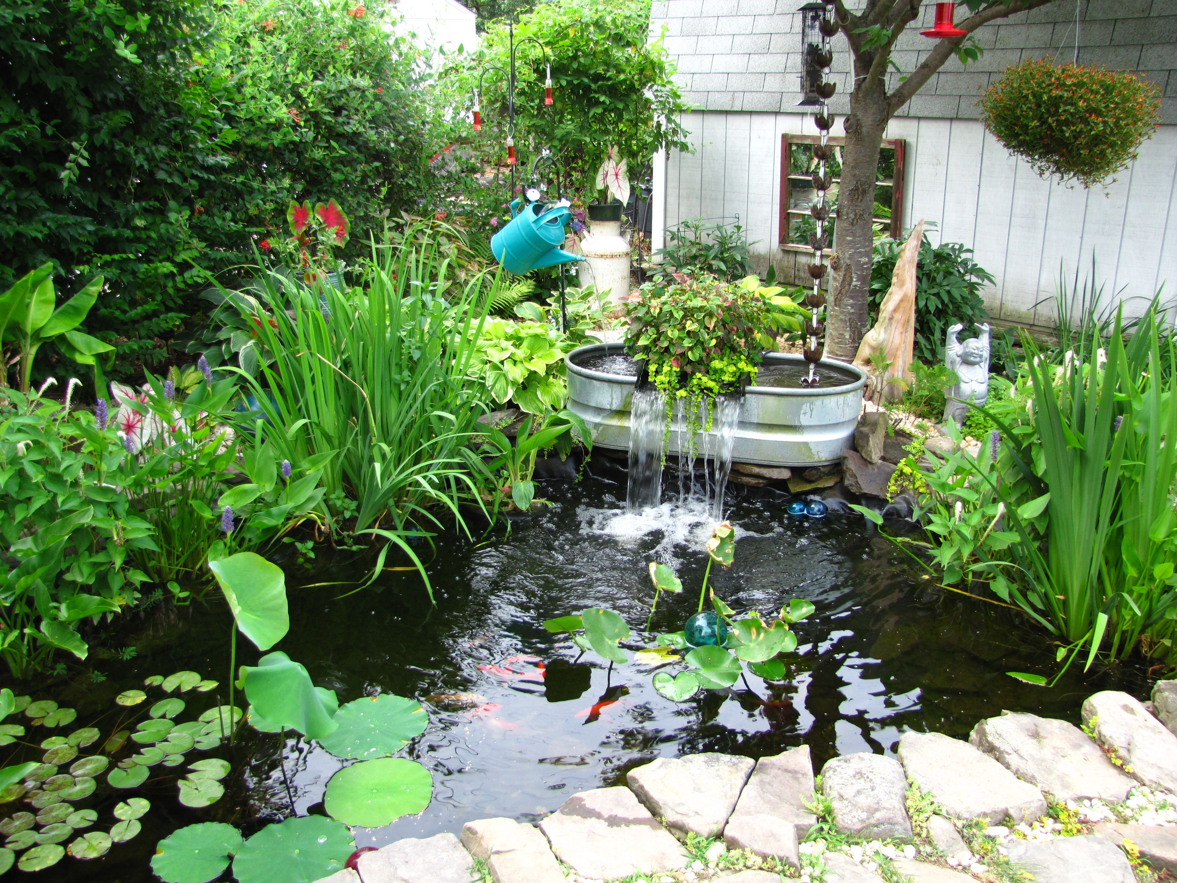 Pin by lee thompson on pools my fantasy swimming holes for Koi fry pool