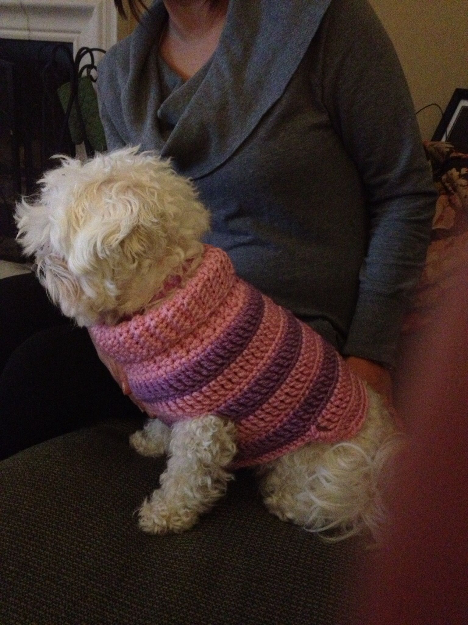 Knitting Pattern For Small Dog Clothes : Small dog sweater KNIT & CROCHET Pinterest