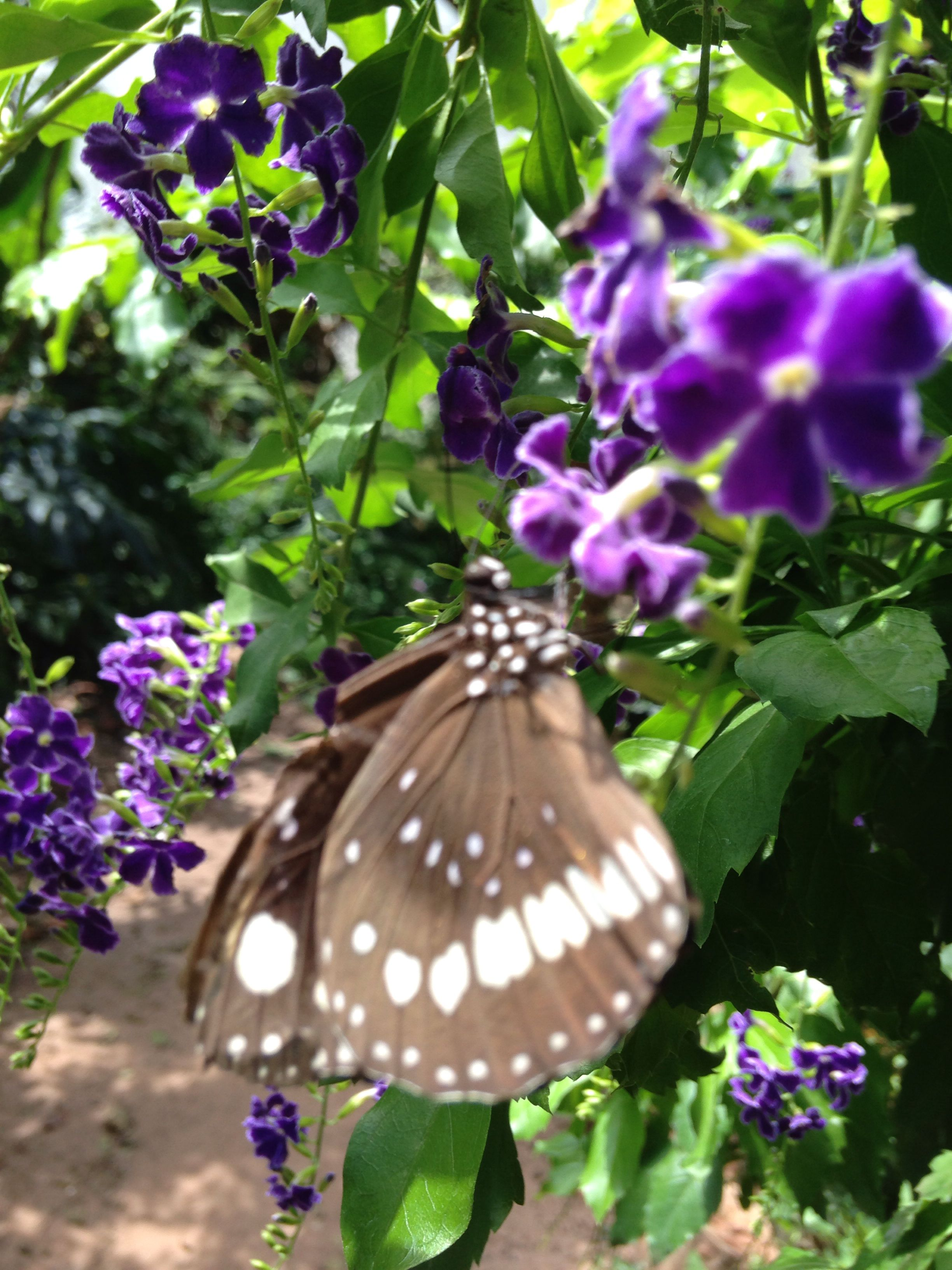 Many flowers to attract butterfly s DREAM GARDEN