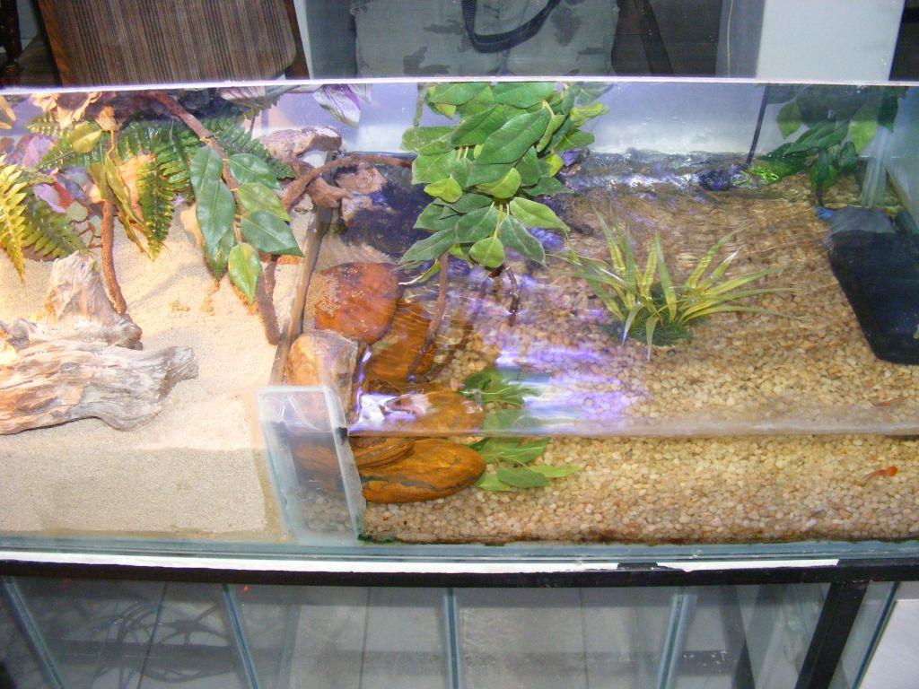 Crocodile skink cage setup - photo#25
