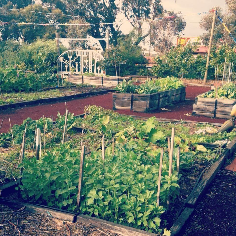 Pinterest Community Garden Ideas Photograph Busselton comm