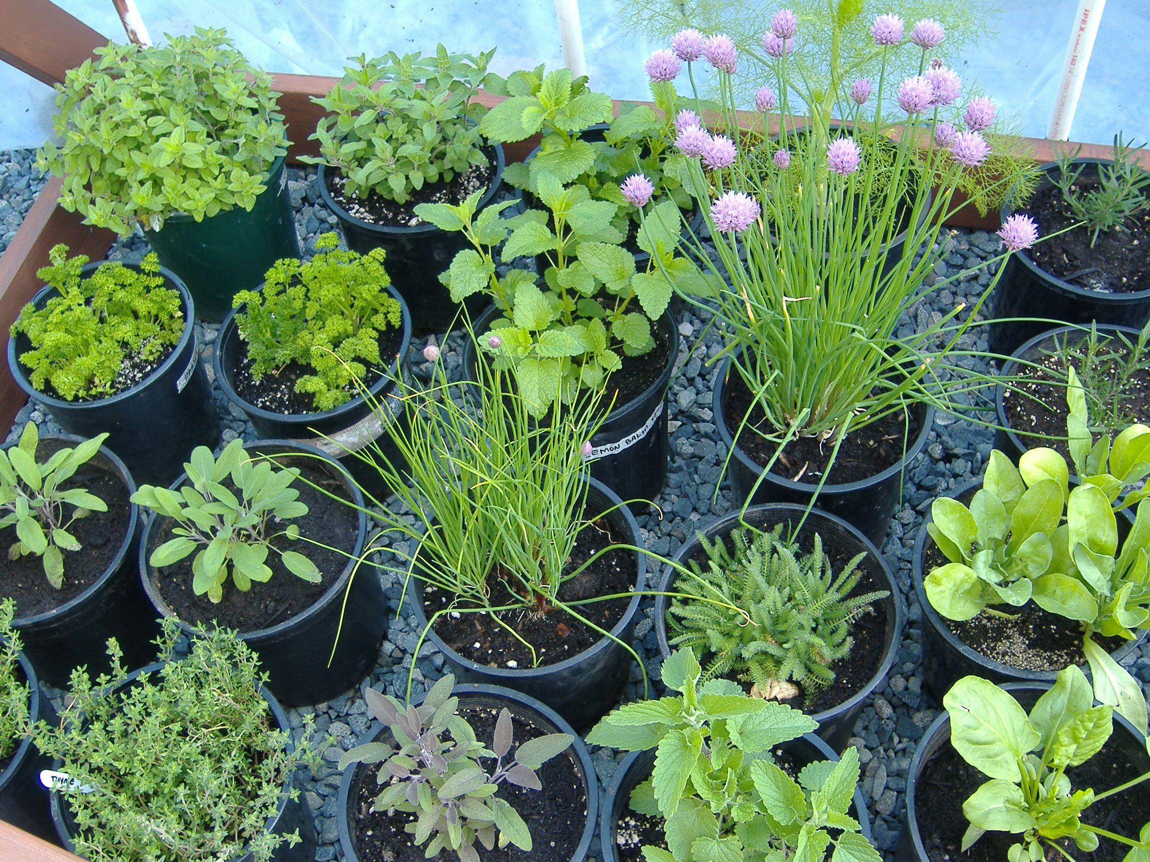 Fresh Planted Herbs Gastronomy Pinterest