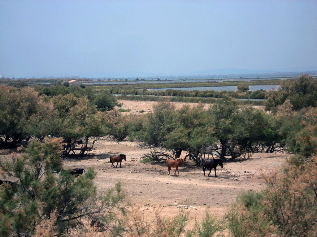Camargue france been there seen that pinterest for Pinterest fr