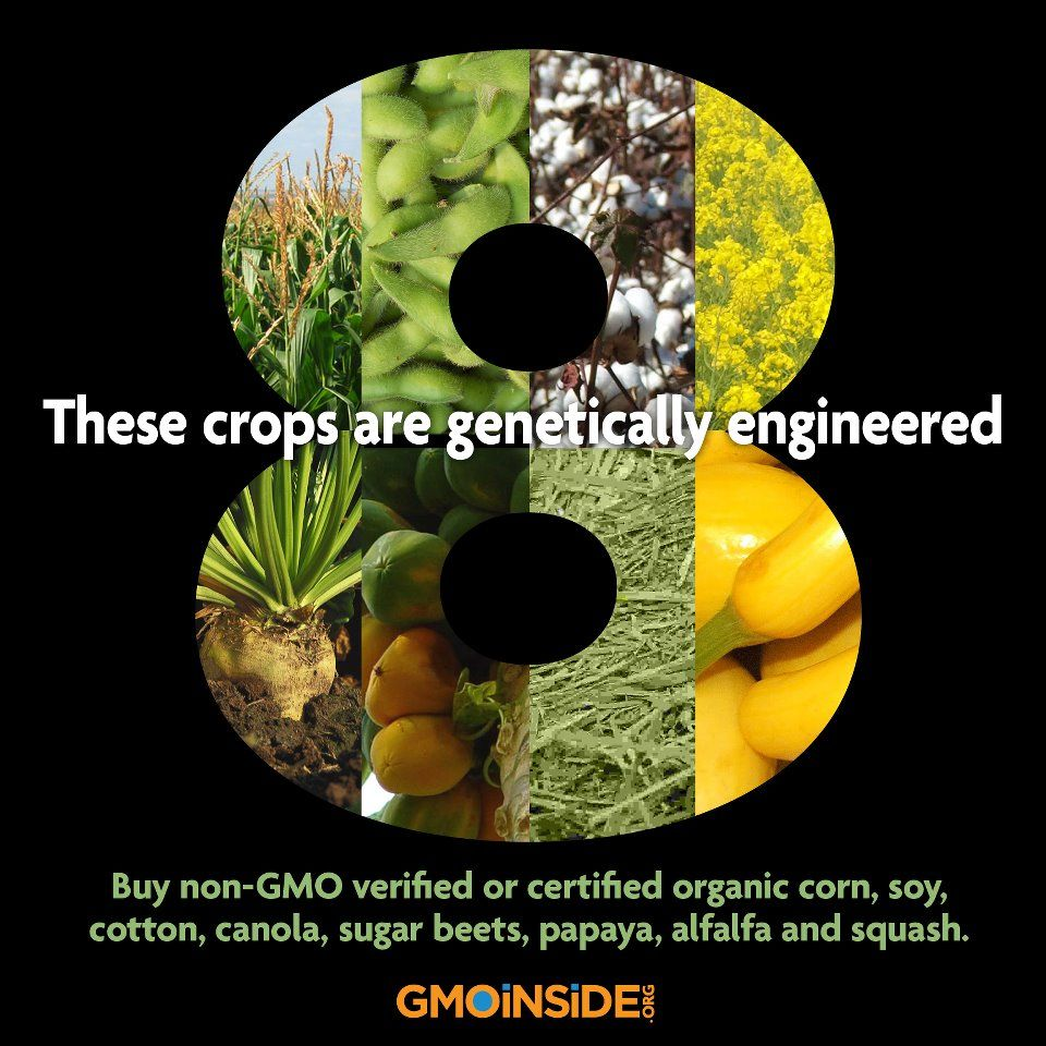 the effects of gmos