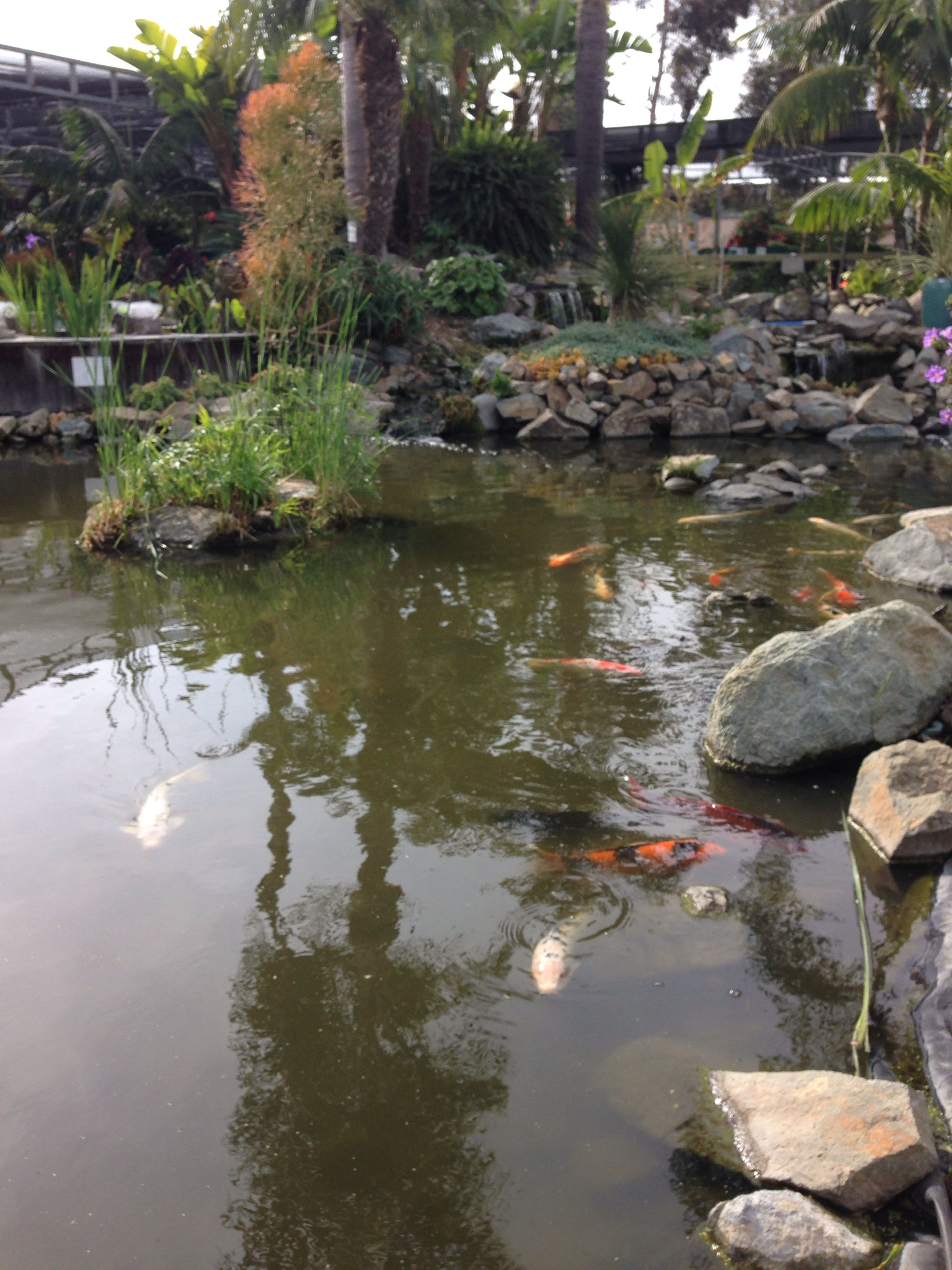 Diy ultimate koi pond garden art and sounds pinterest for Homemade koi pond